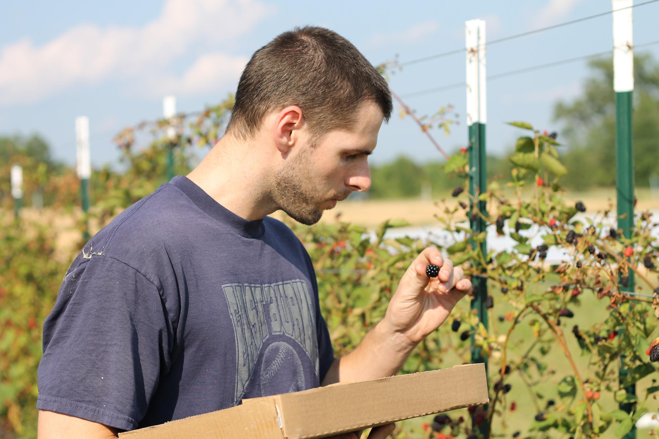 Elizabeth Burns Design   Raleigh Blackberry Picking