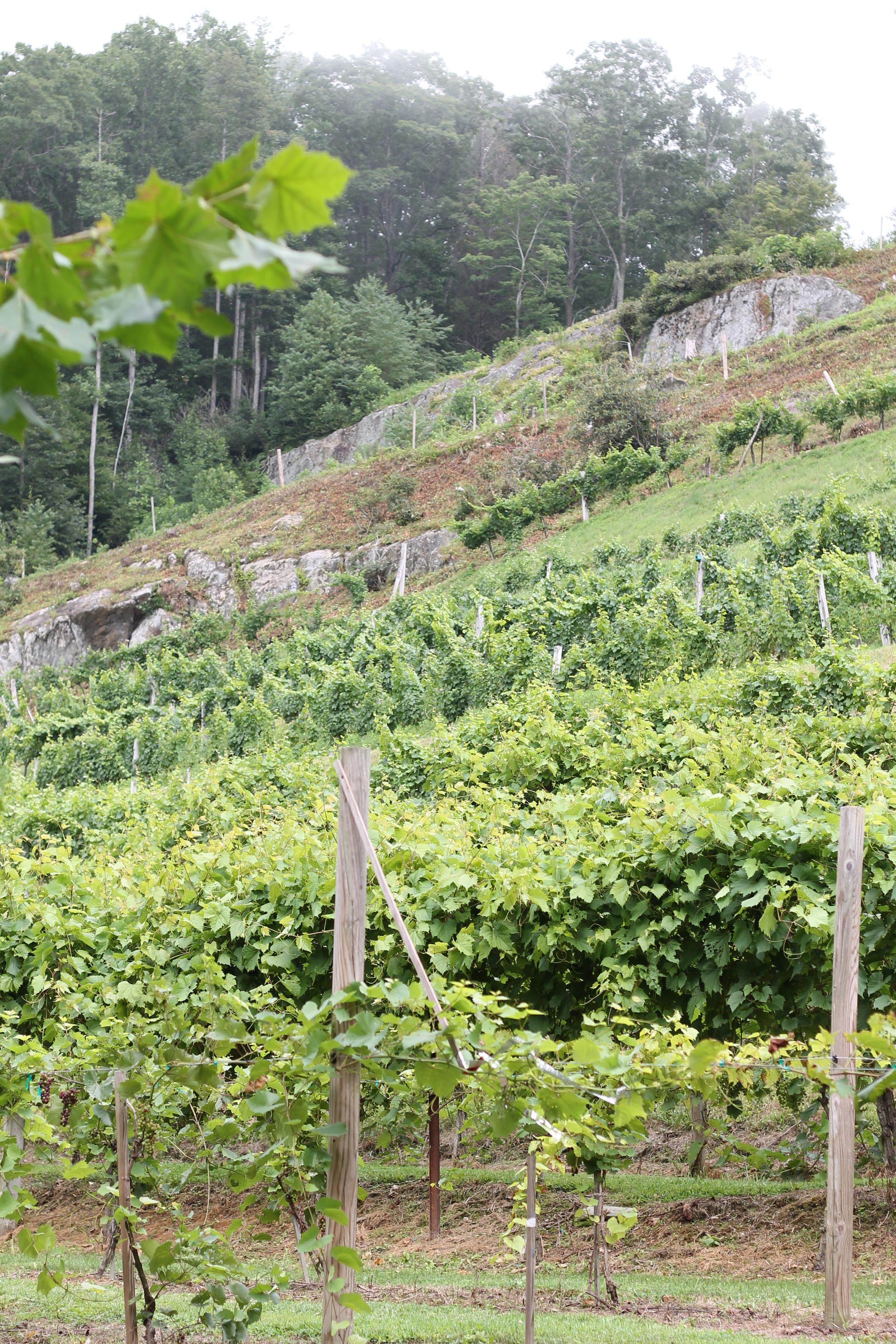 Elizabeth Burns Design | Grandfather Vineyard Winery, Boone NC