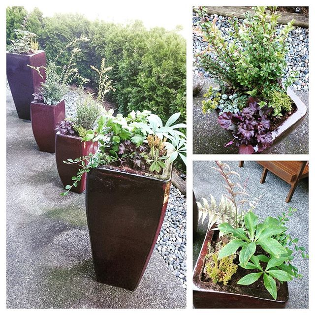 Some lovely planters that one of our designers did up for a client last week. We love the diversity in the plantings and can add another happy client to the list 🌷🌿🌸🌾