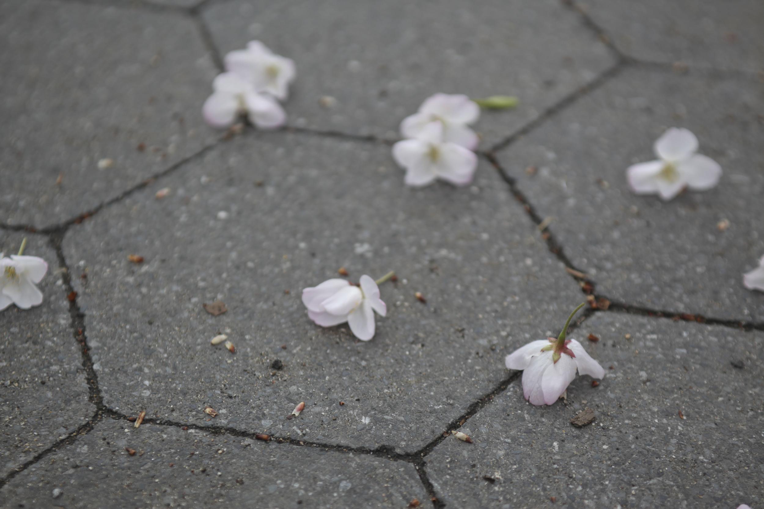 2013-spring-nyc_52.jpg