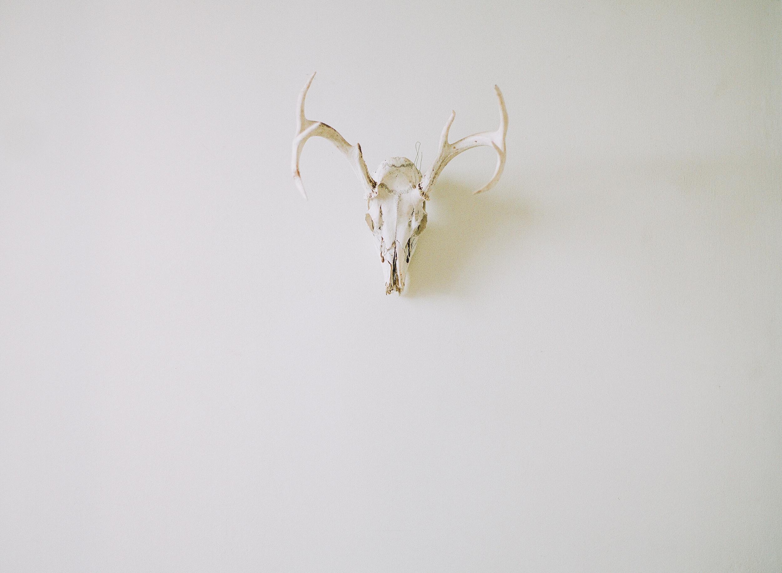 deer_skull-1.jpg