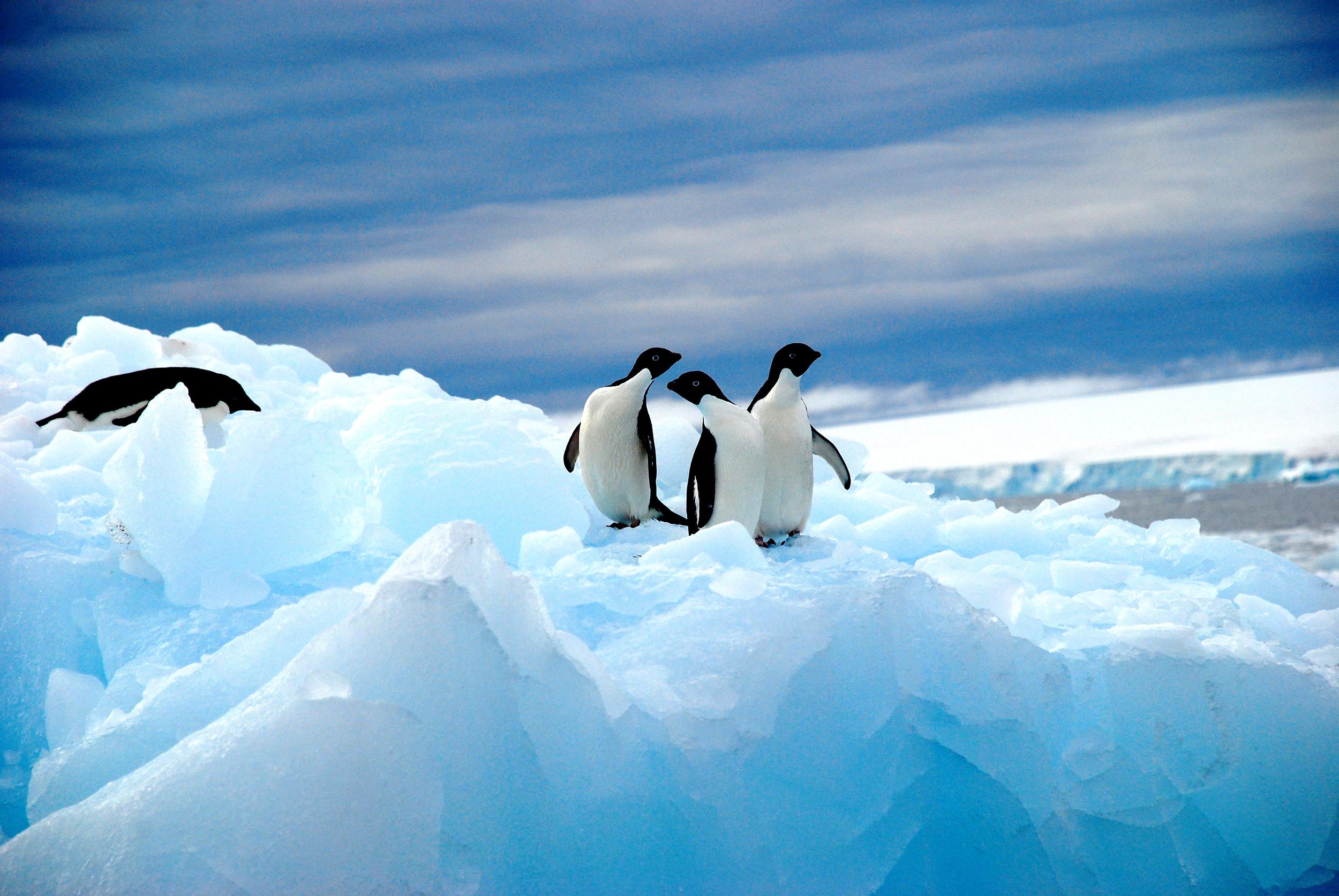 Wenker_Antarctic_0013.jpg