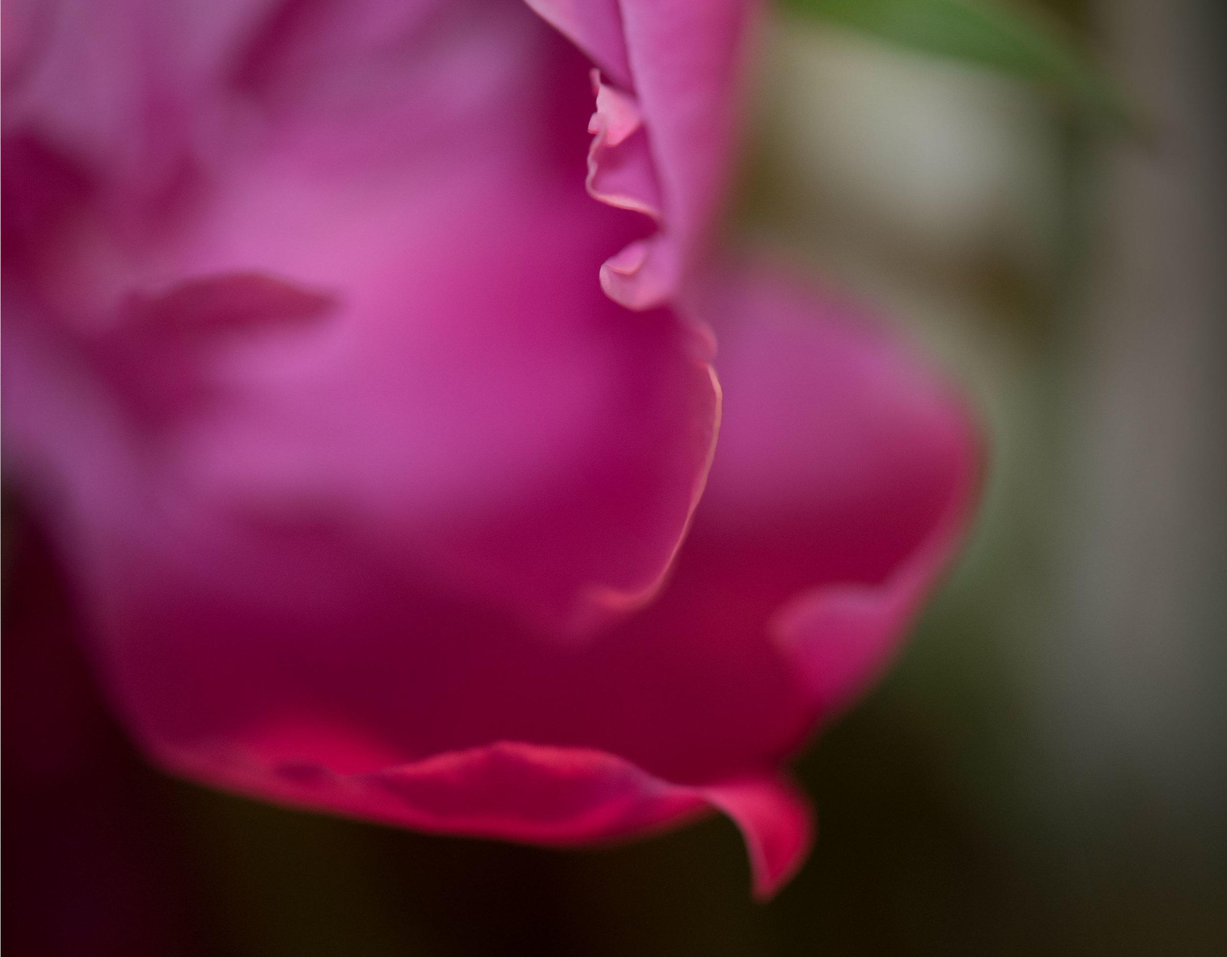 flower-fairy.jpg