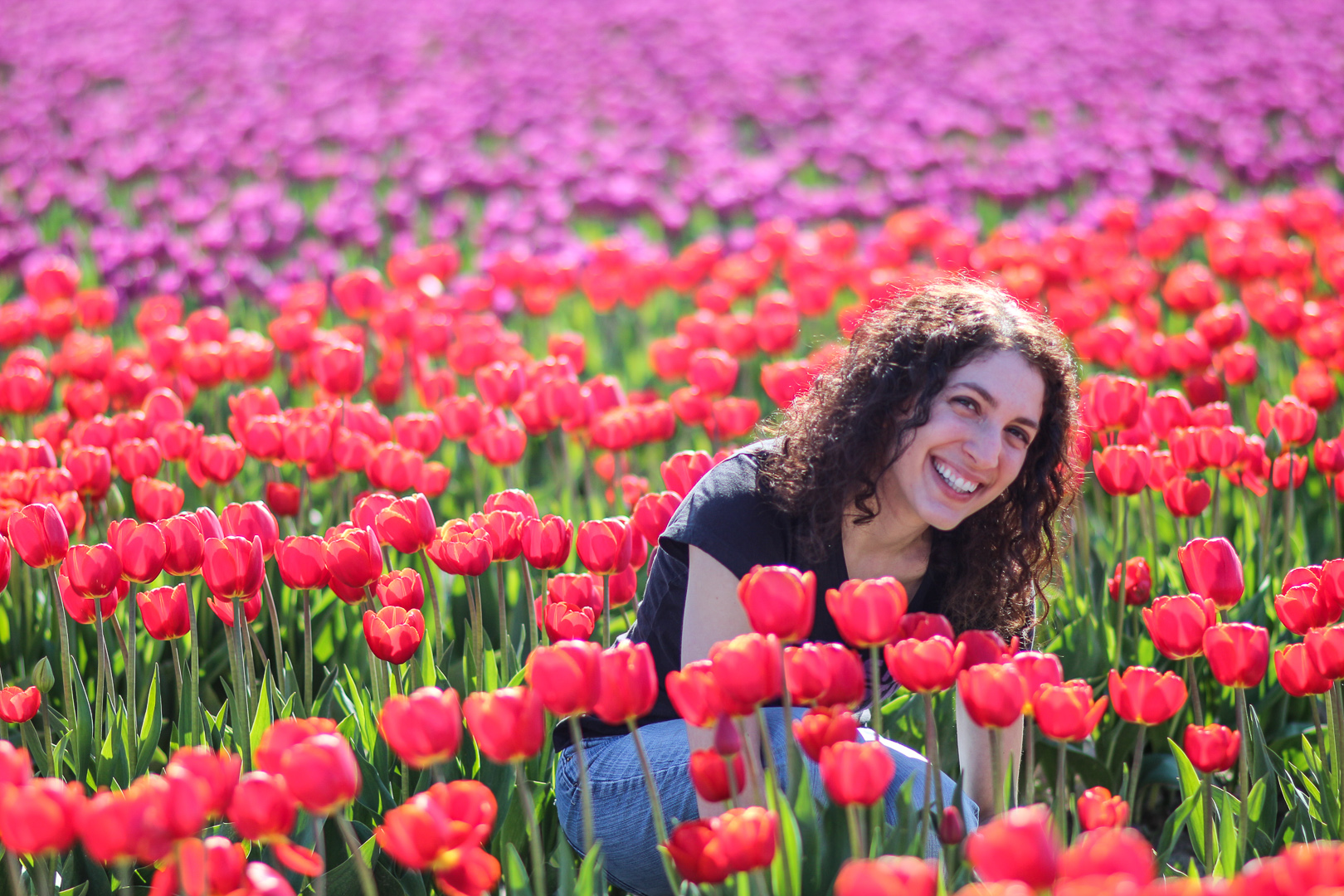 Washington_Tulips_5.jpg