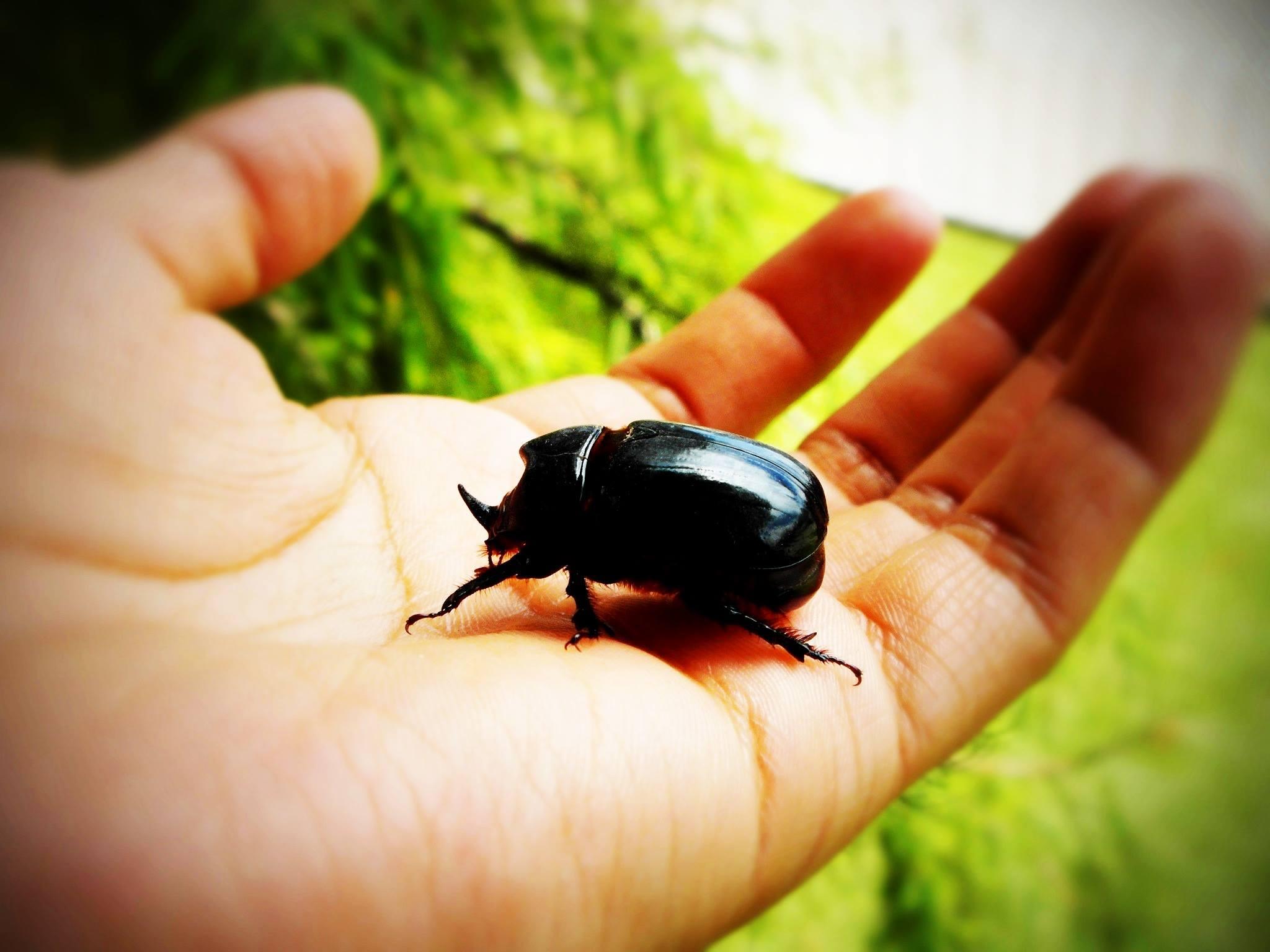 beetle.jpg