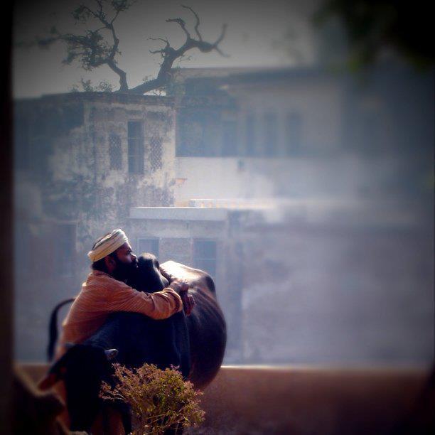 huggingbuffalo.jpg