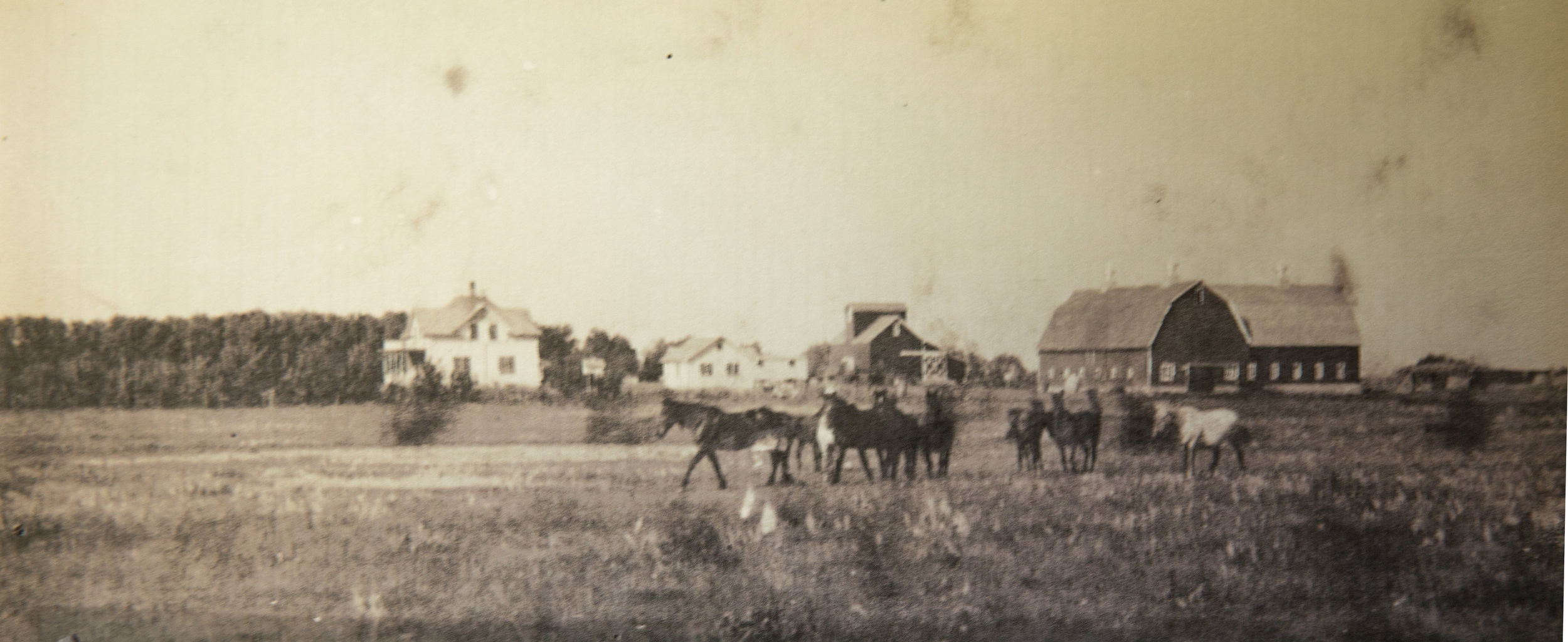 Minnie's childhood farm was known as the Leland farm. It was one of the largest farmsteads in the area.