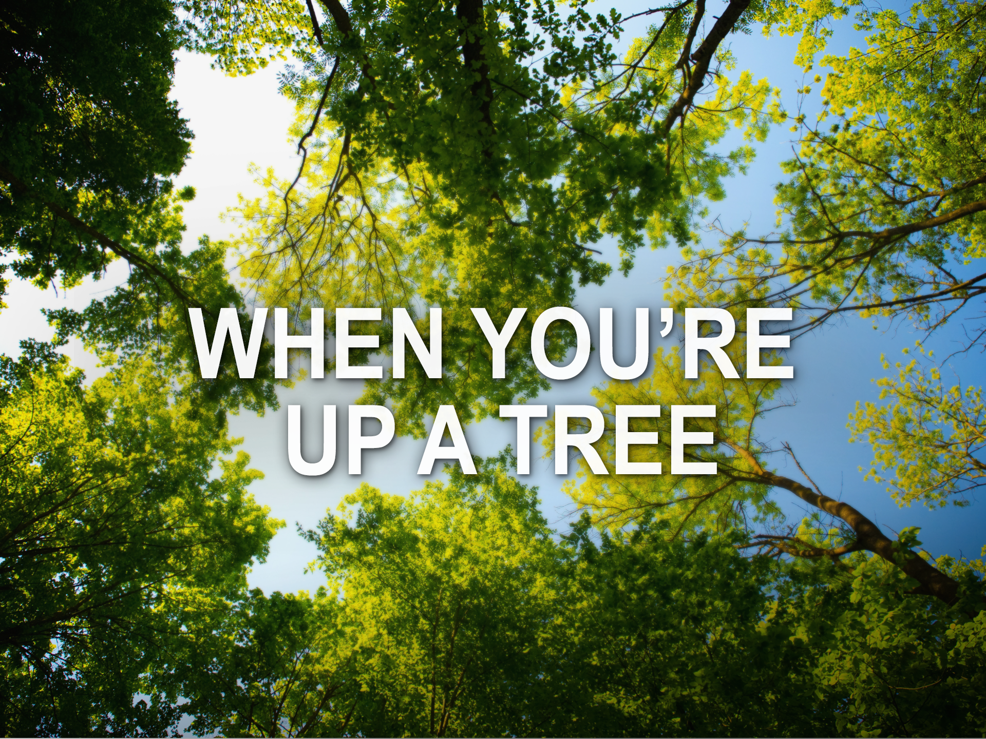 082519 when youre up a tree.png