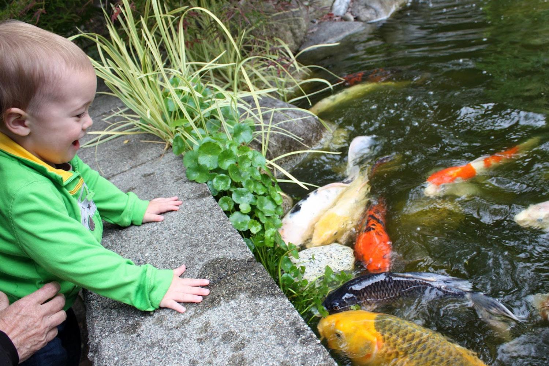 Boy Feeding Koi Fish