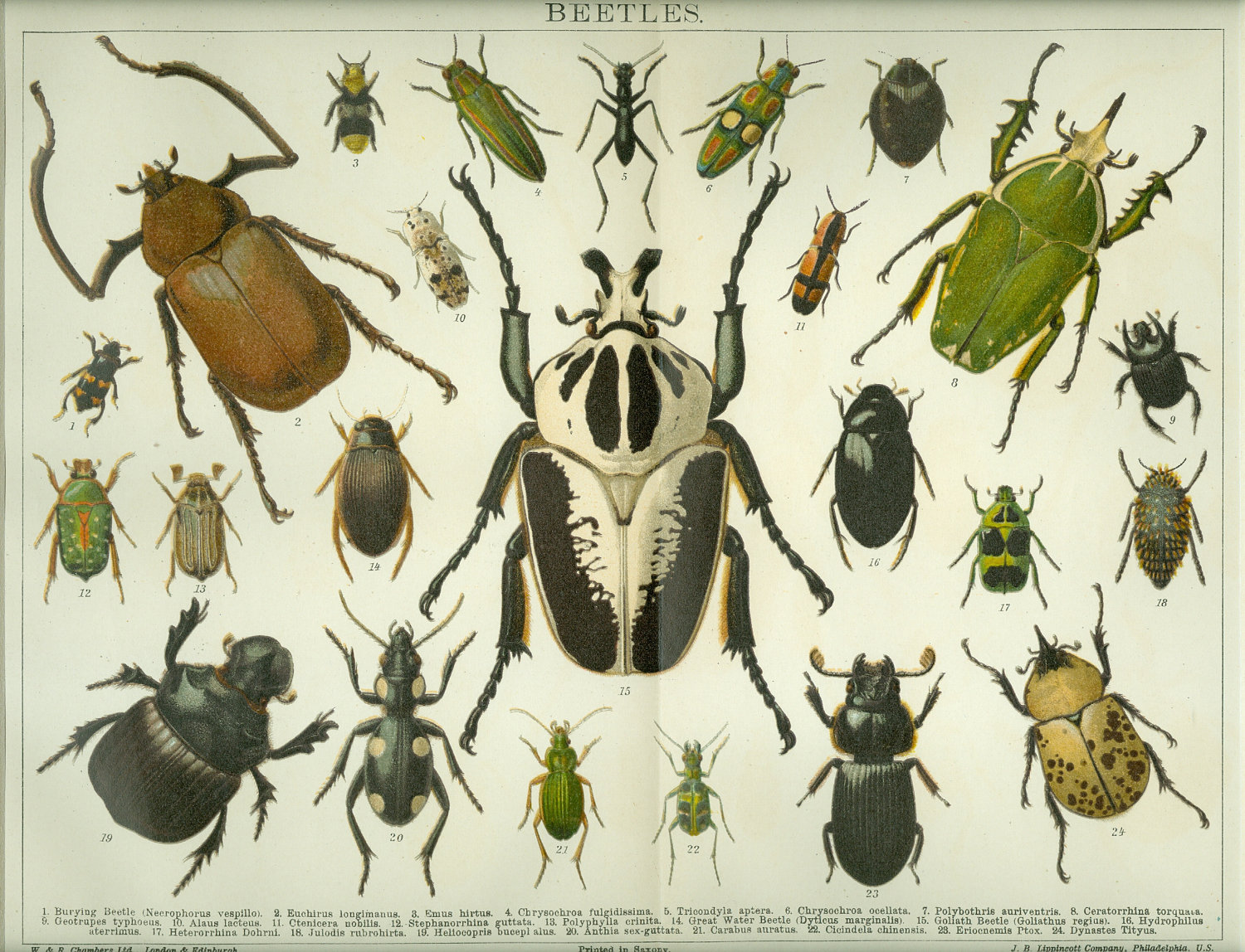 Oracle.Insects101.jpg