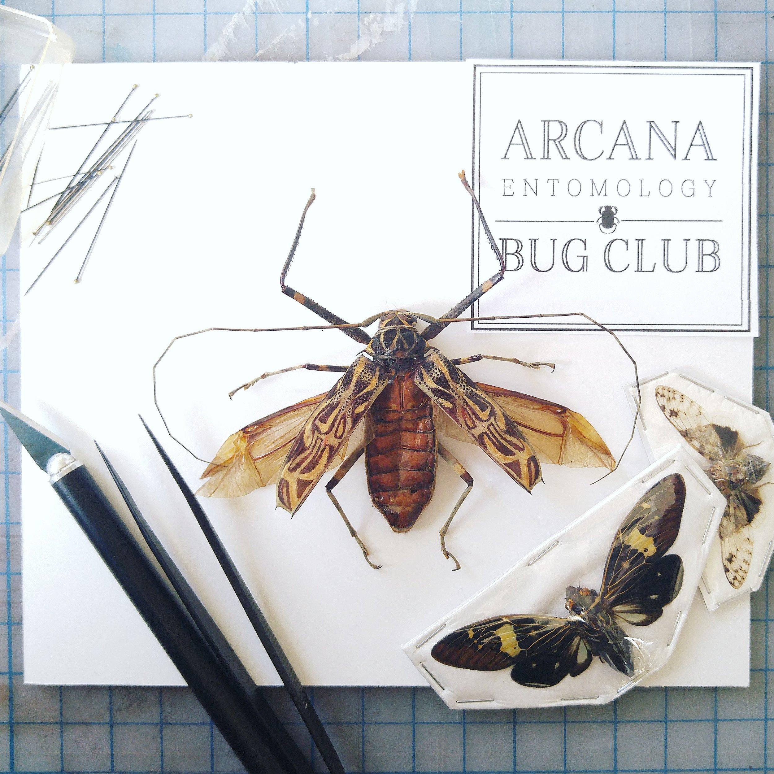 oracle.arcanabugclub.jpg