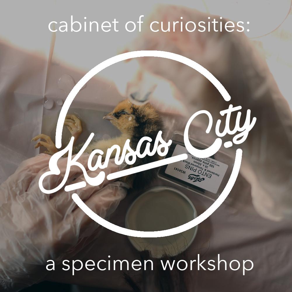 KansasCityCurioMAK.jpg