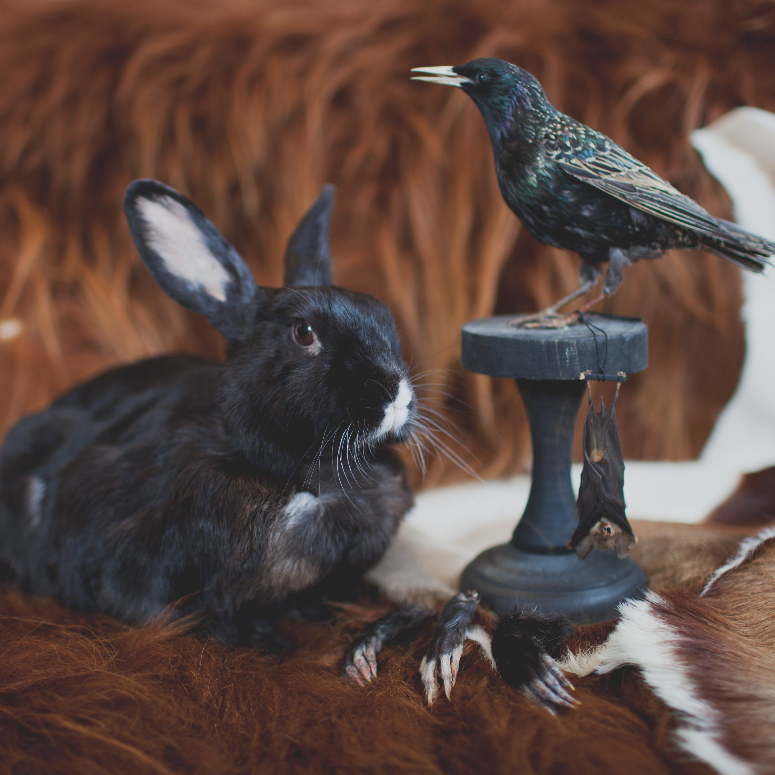 Taxidermy & Furs
