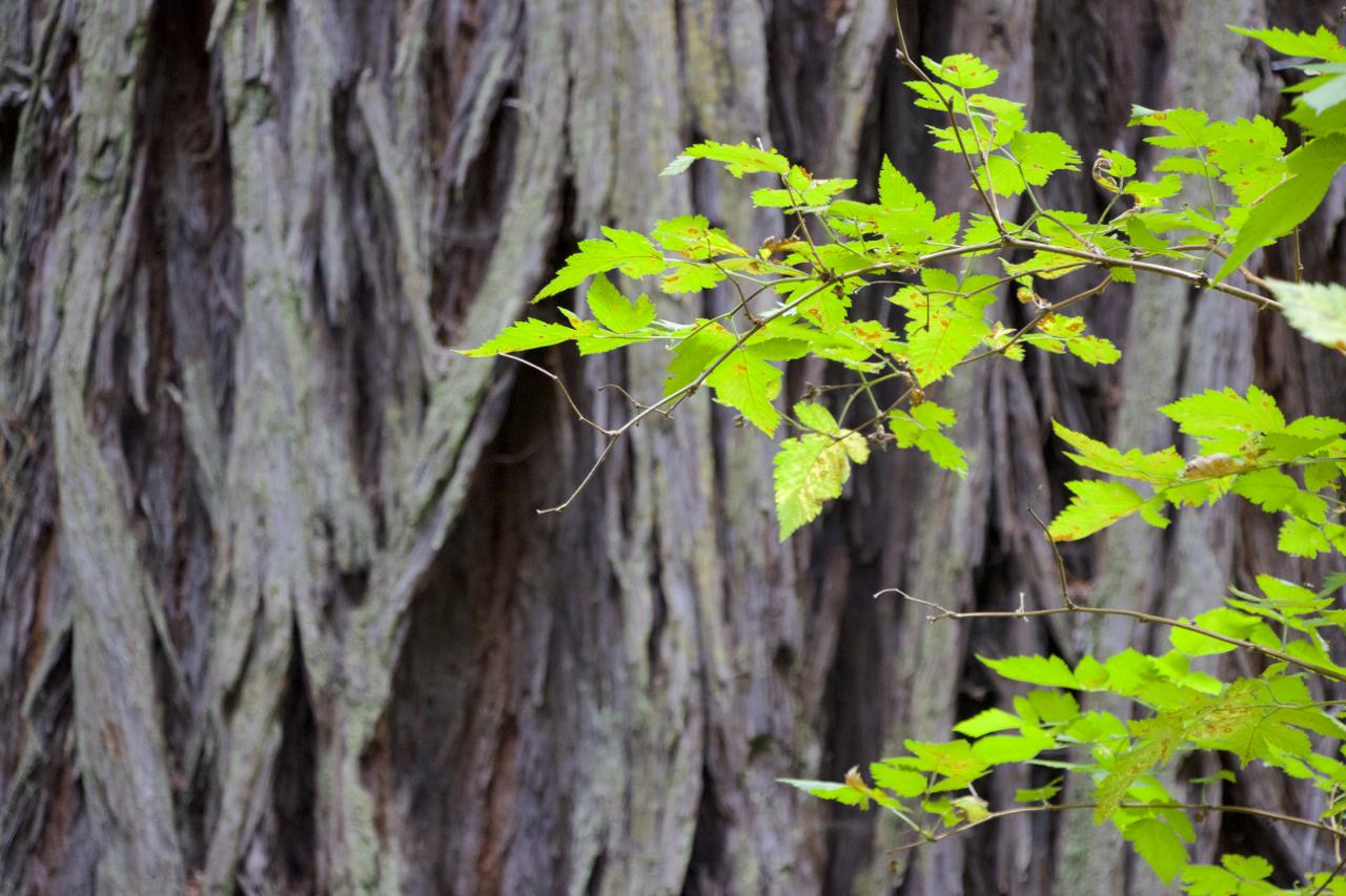"""Green on Redwood"""