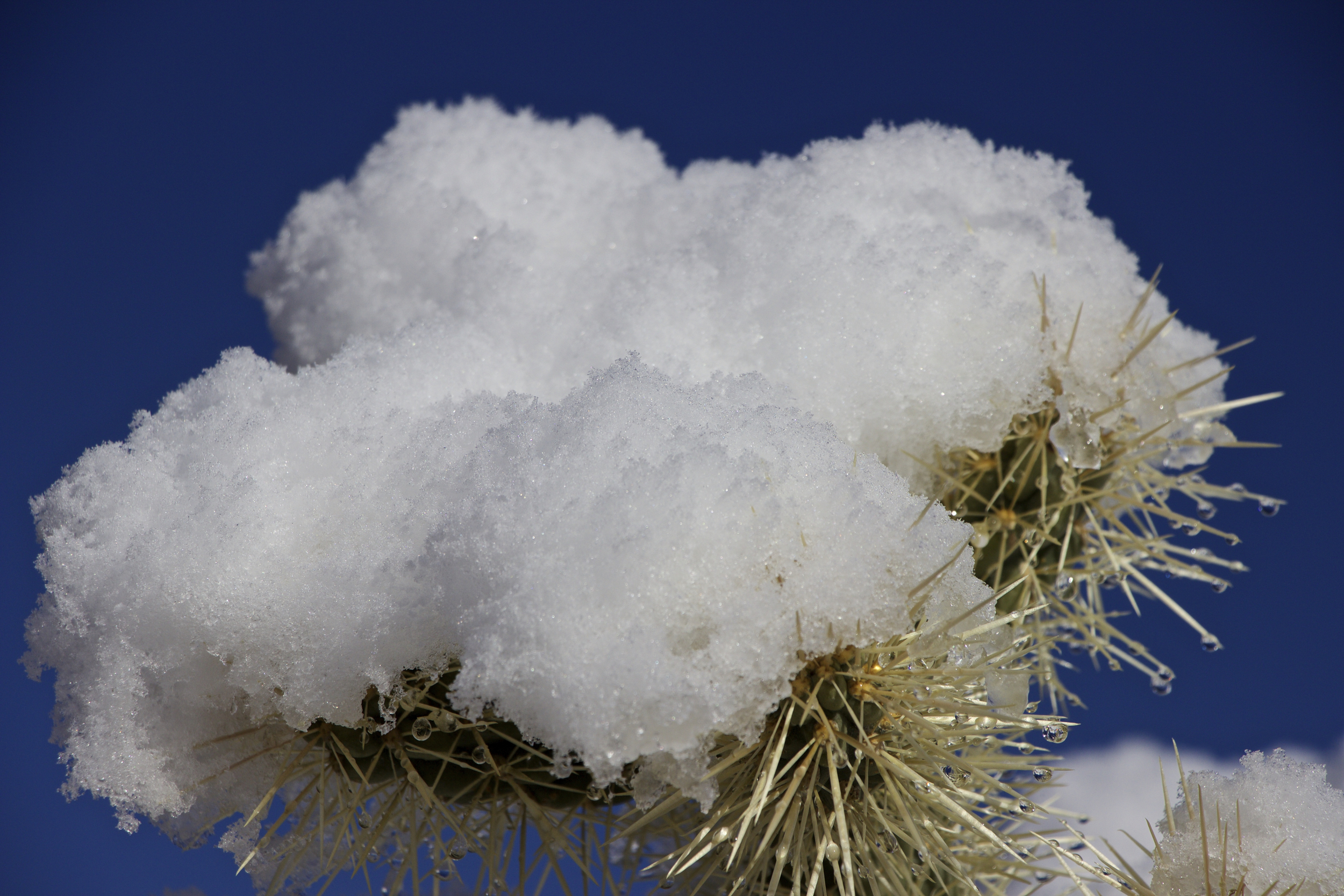 """Snow Clouds and Spines"""