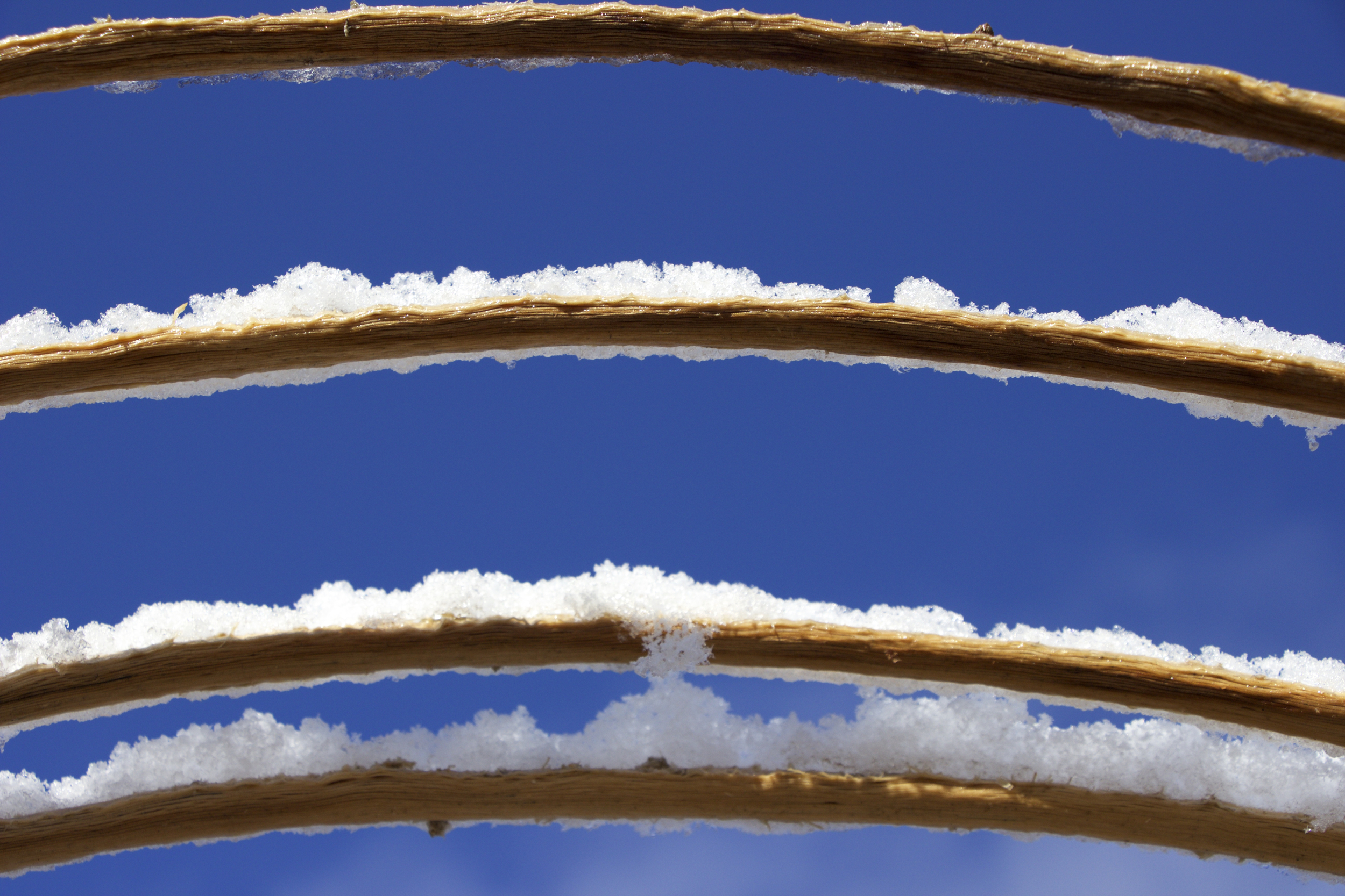 """Snowy Horizontal Saguaro Ribs"""