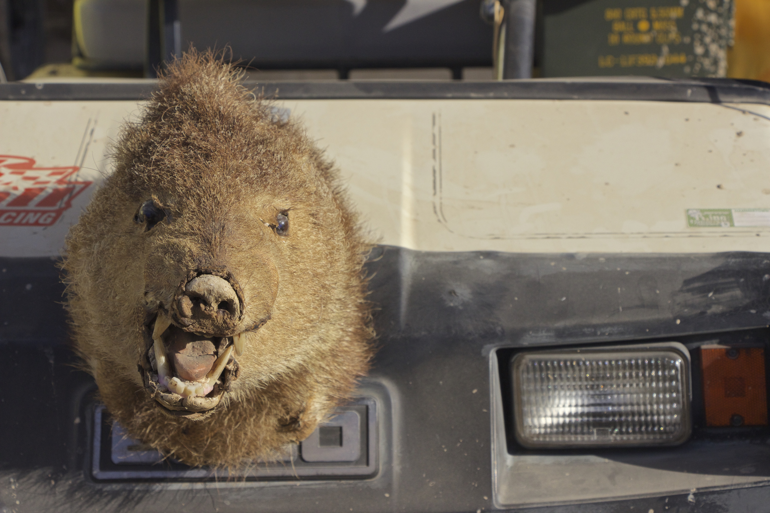 """Golf Cart Javelina"""