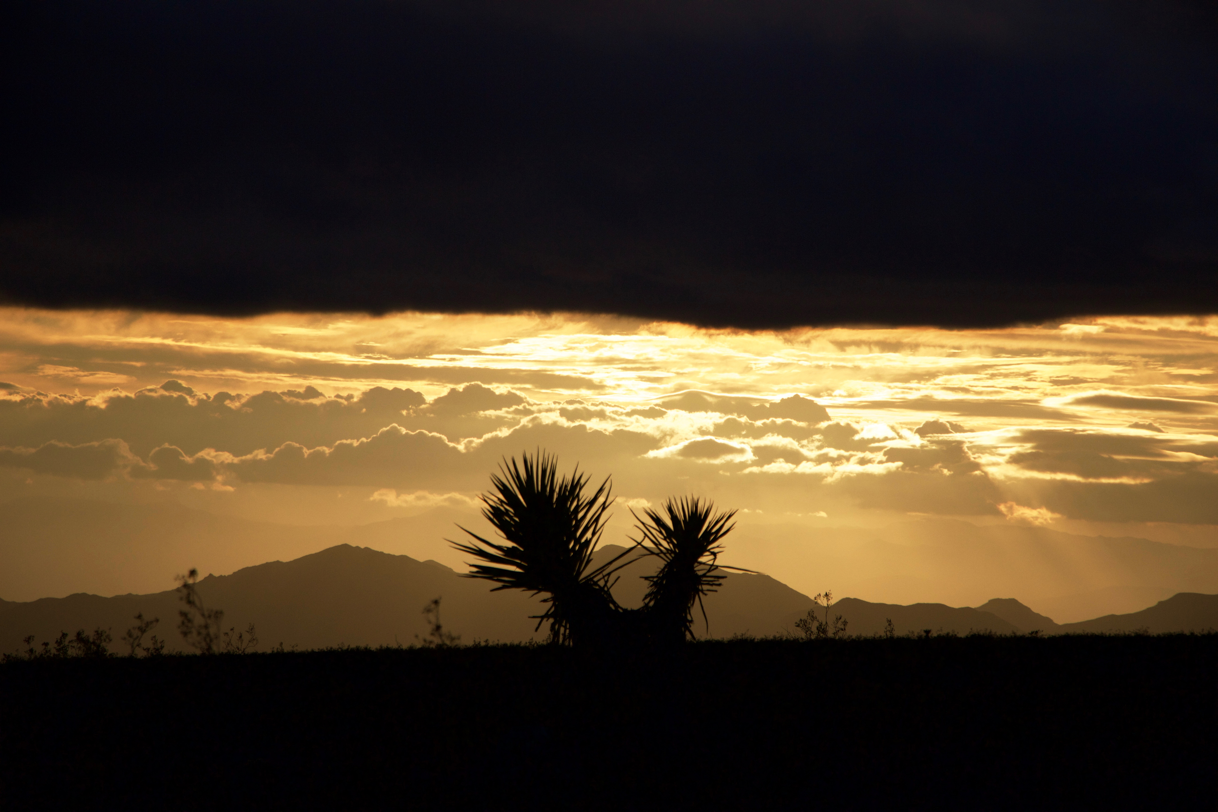 """Mojave Yucca Sunset #1"""