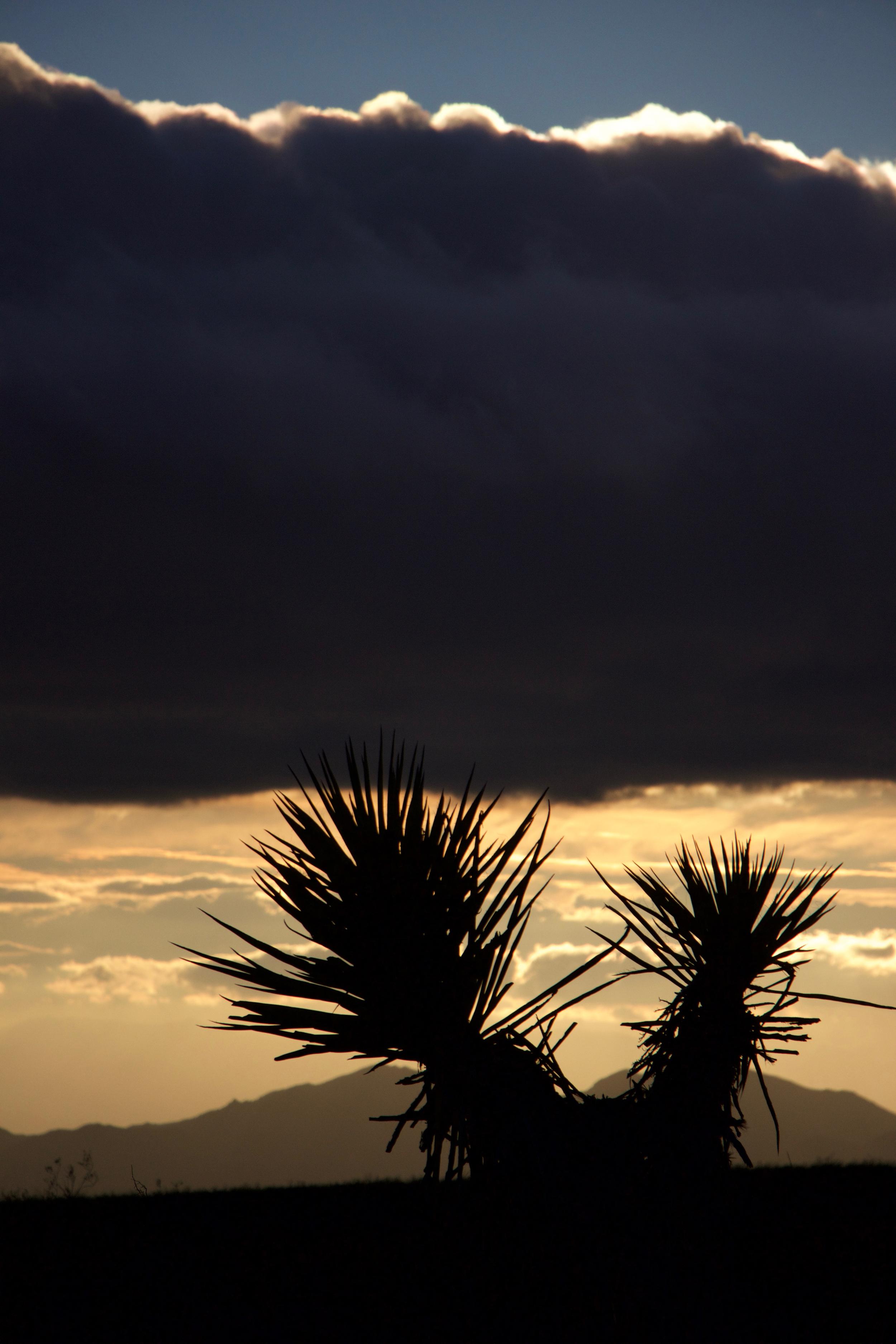 """Mojave Yucca Sunset #2"""