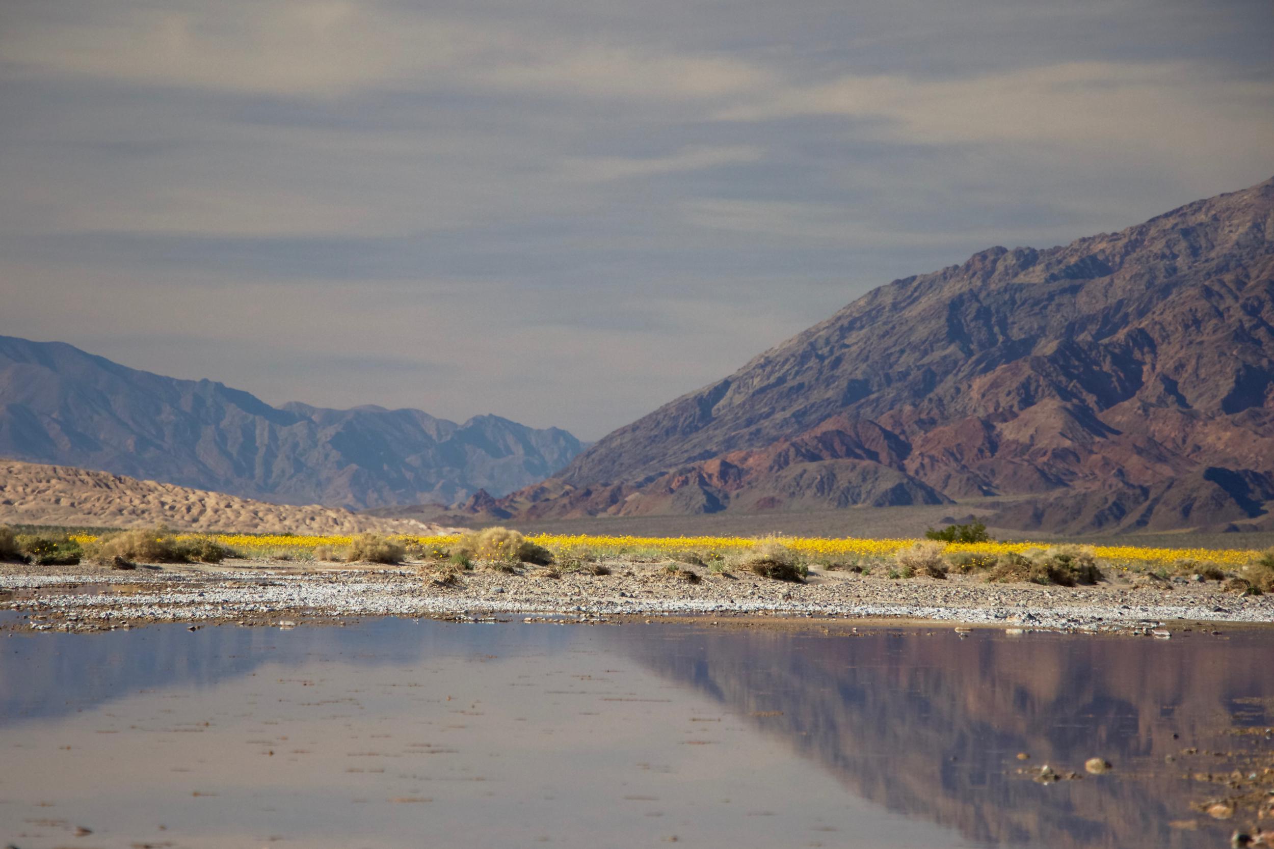 """Amargosa River Wildflowers #1"""