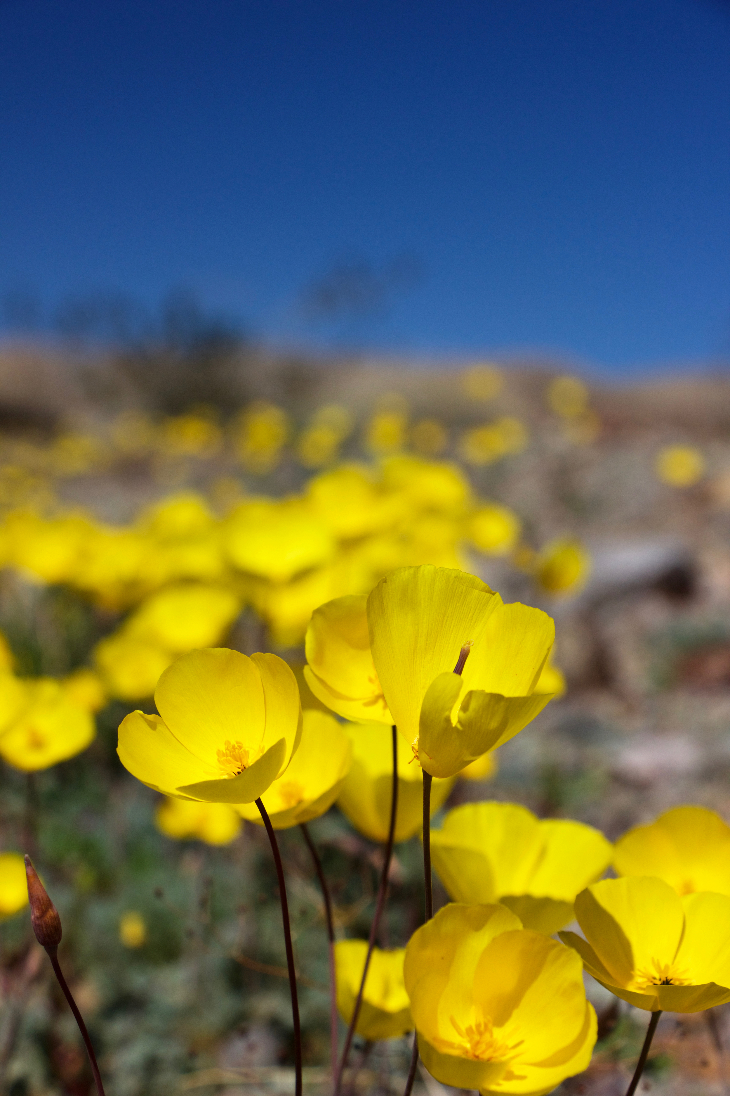 """""""Death Valley Blue and Yellow"""""""