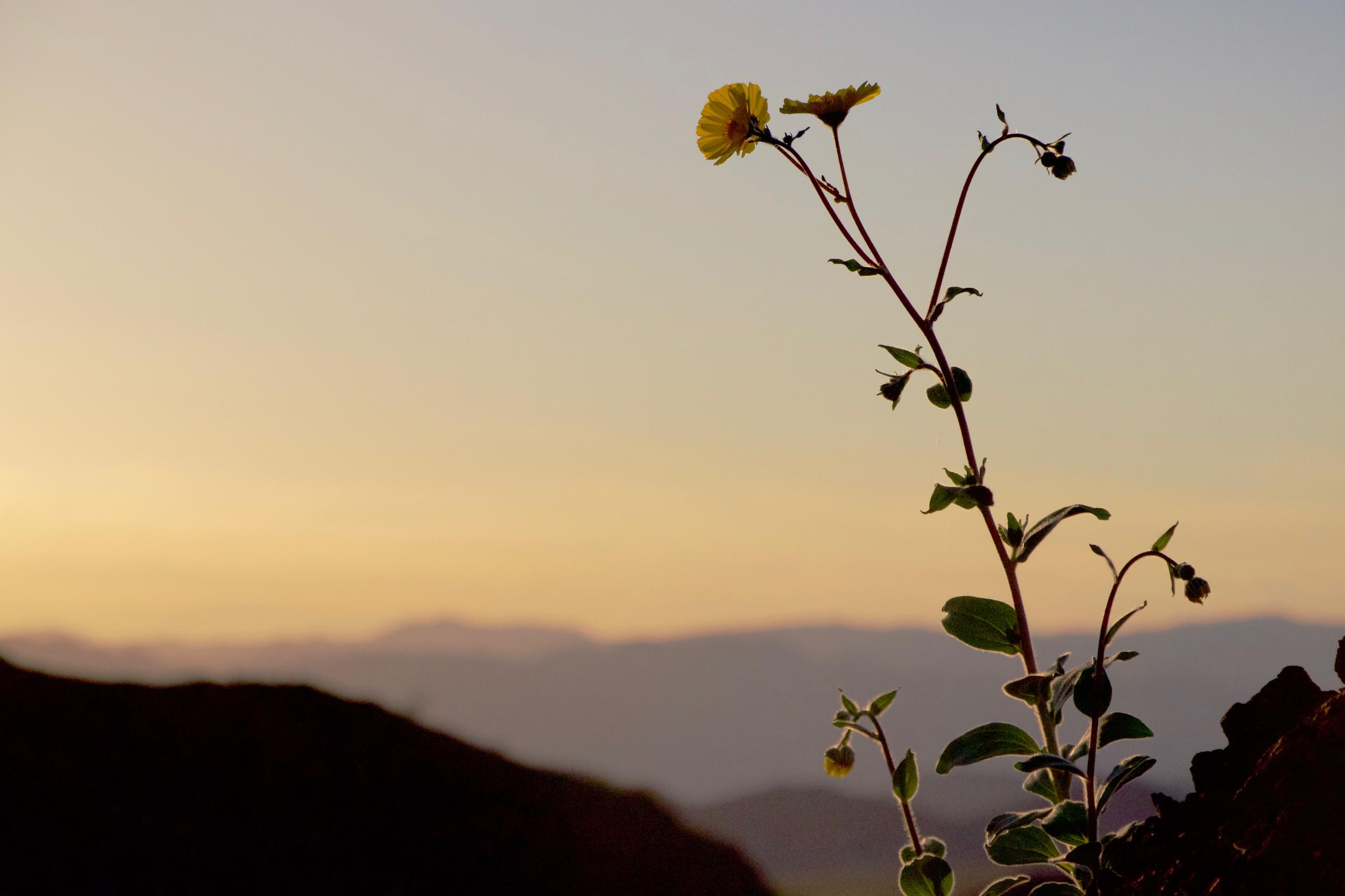 """""""Desert Sunflower Sunset #2"""""""