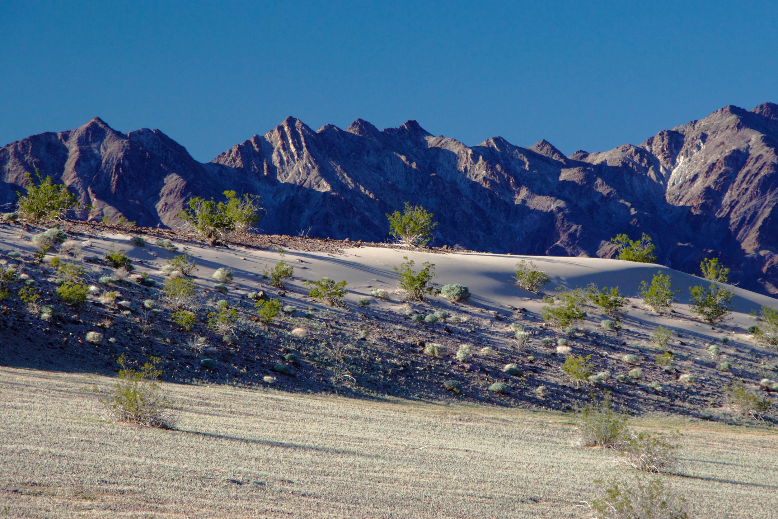 """""""Ibex Dunes Sandy Ridge"""""""
