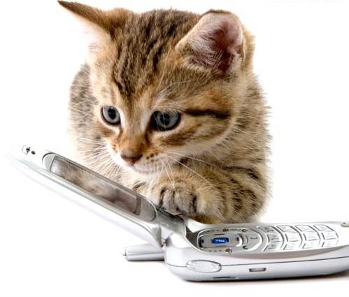cat-phone-mp.jpg
