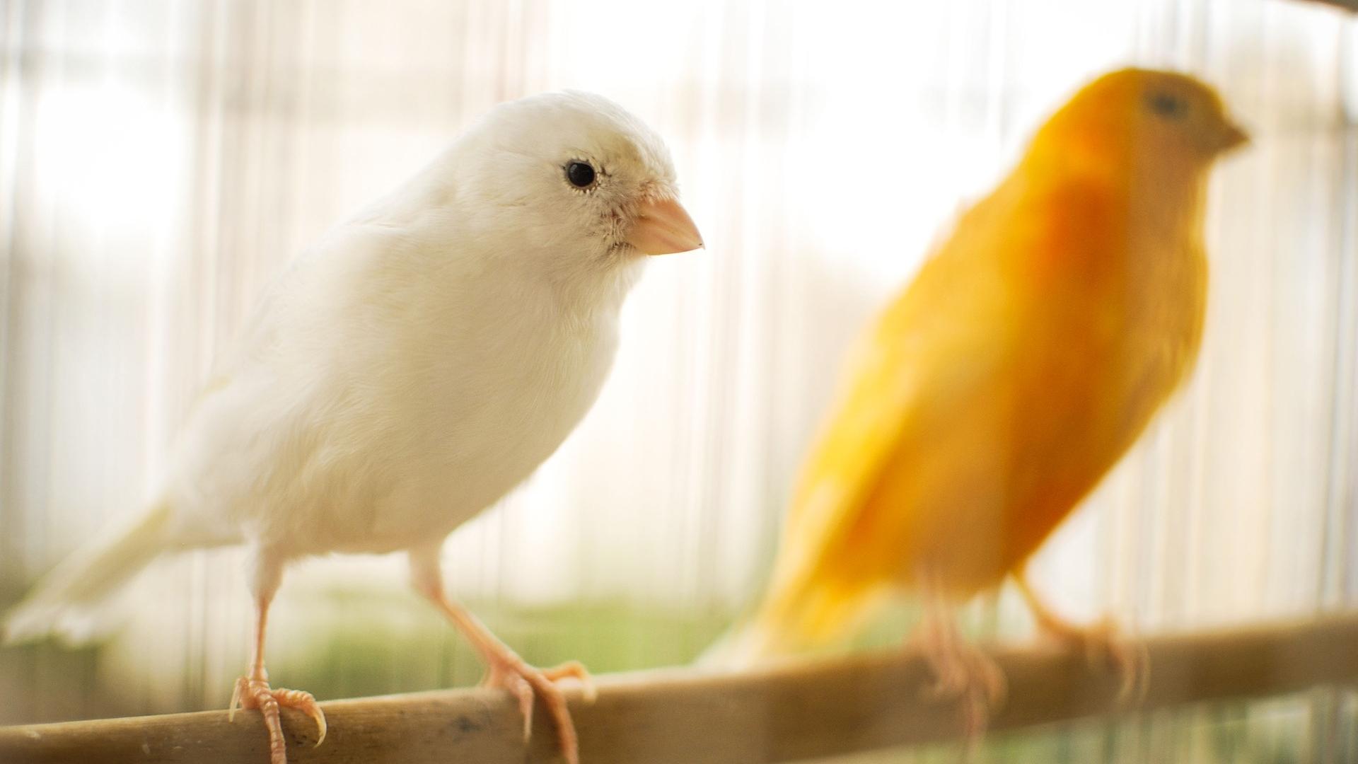 bird-2871833_1920.jpg