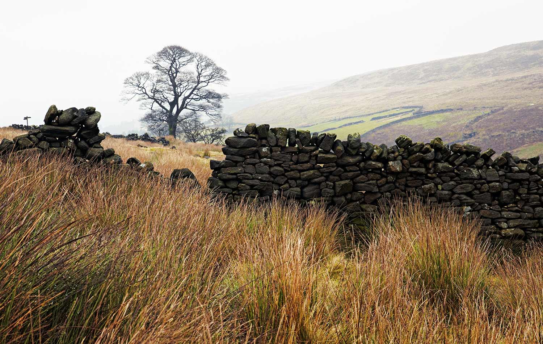 Wild Windy Moors