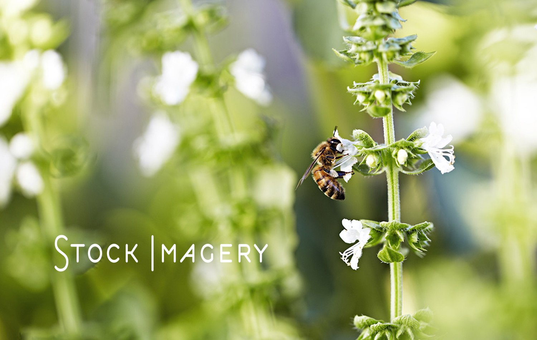 Stock-Imagery-Kylie-Grinham-Fenchurch-Studios-Melbourne-Photographer.jpg