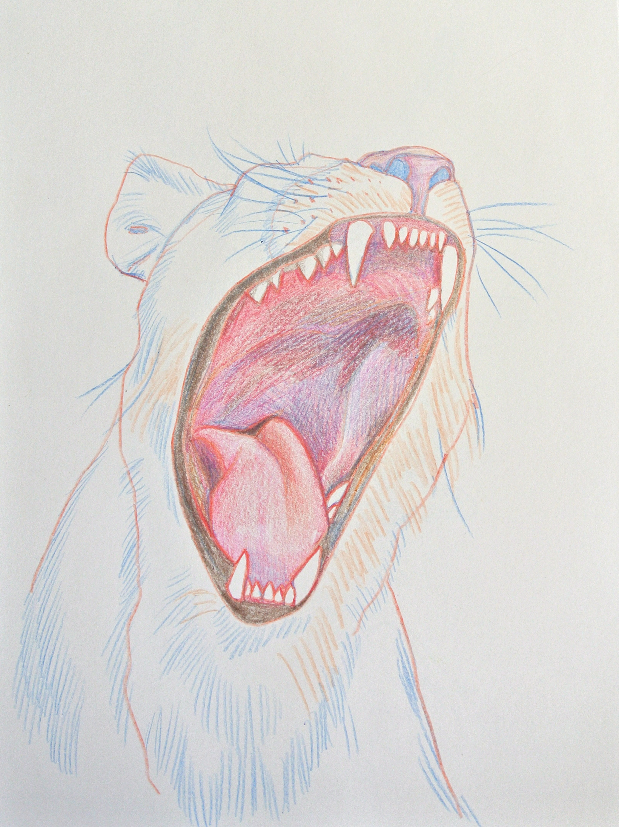 """LIONESS    pencil on paper, 10 x 14"""", 2013"""