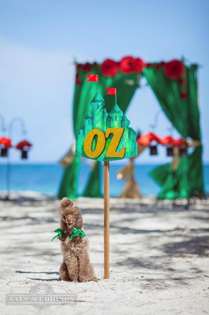 Oz1.jpg