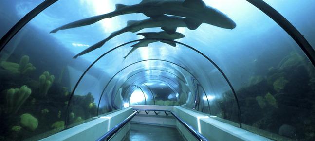 acuario-nacional-passeios-republica-dominicana-f-002_32_648x290.jpg