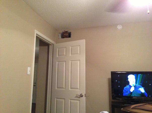 ninja-cat-hiding-funny-10__605.jpg