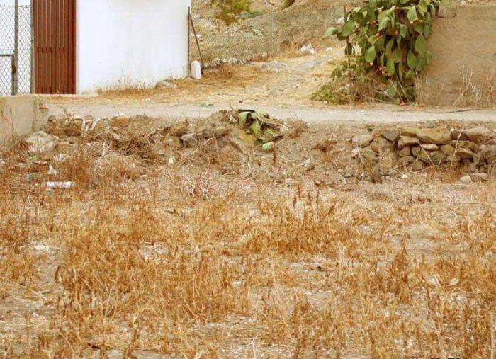 Find_the_Hidden_Cat.jpg