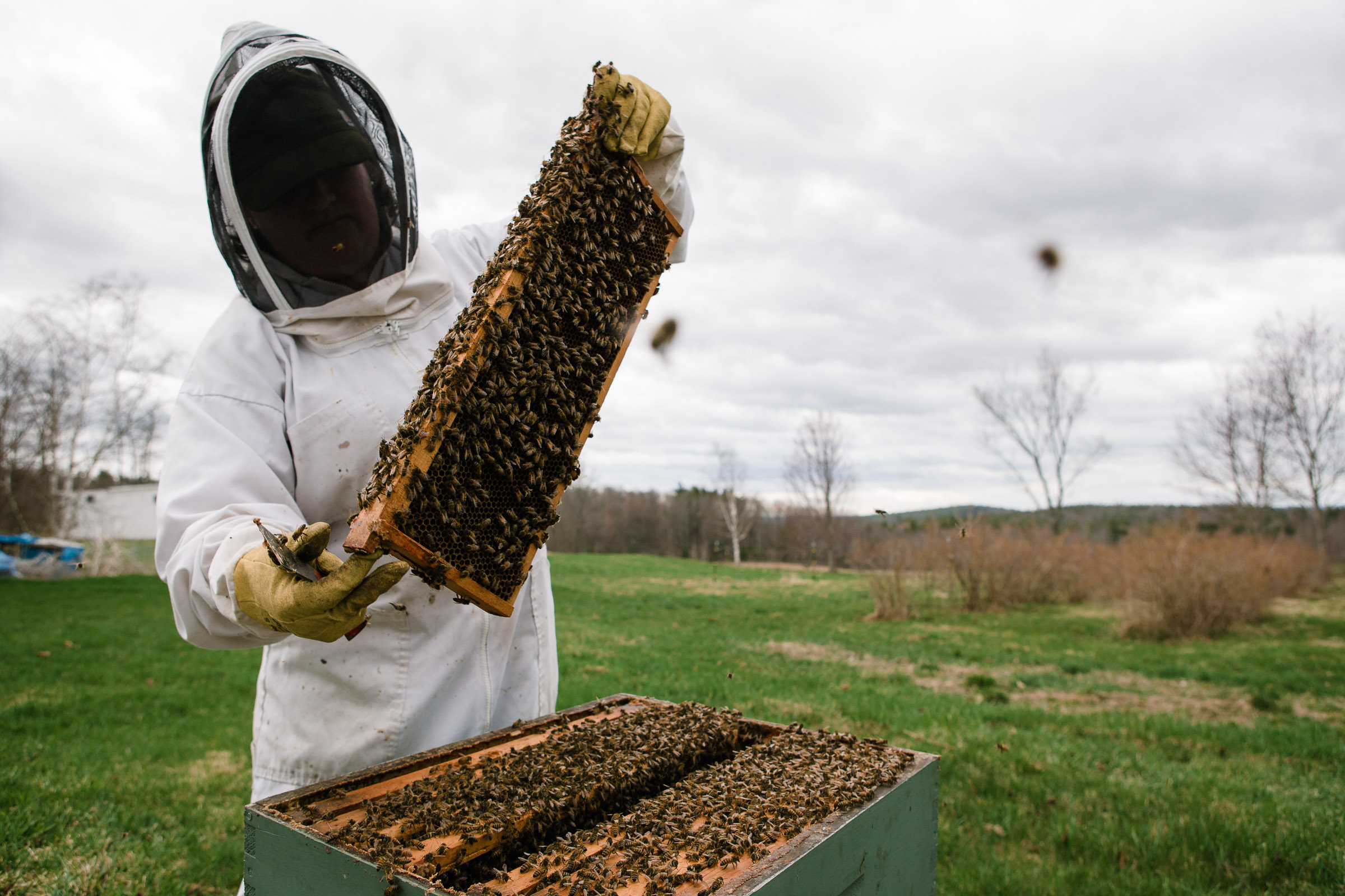 agri_bees_April2013_by_Lomanno_0076.jpg