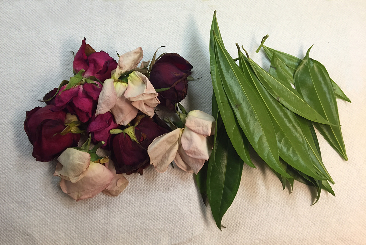 rose petals from doug - to use in the dye pot