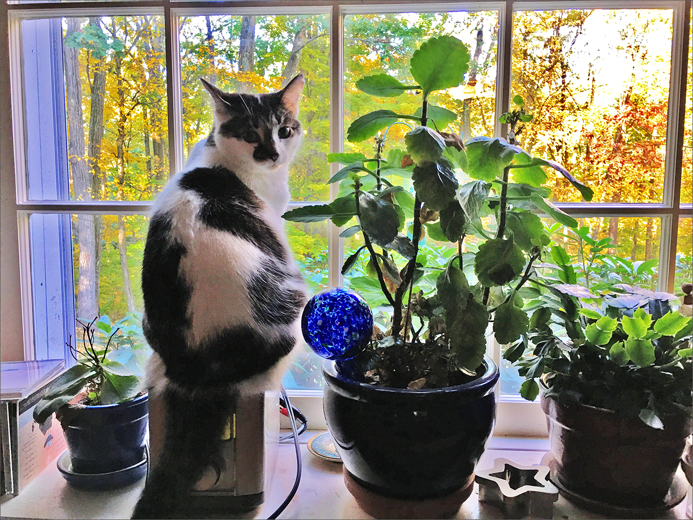puddle on the plant shelf