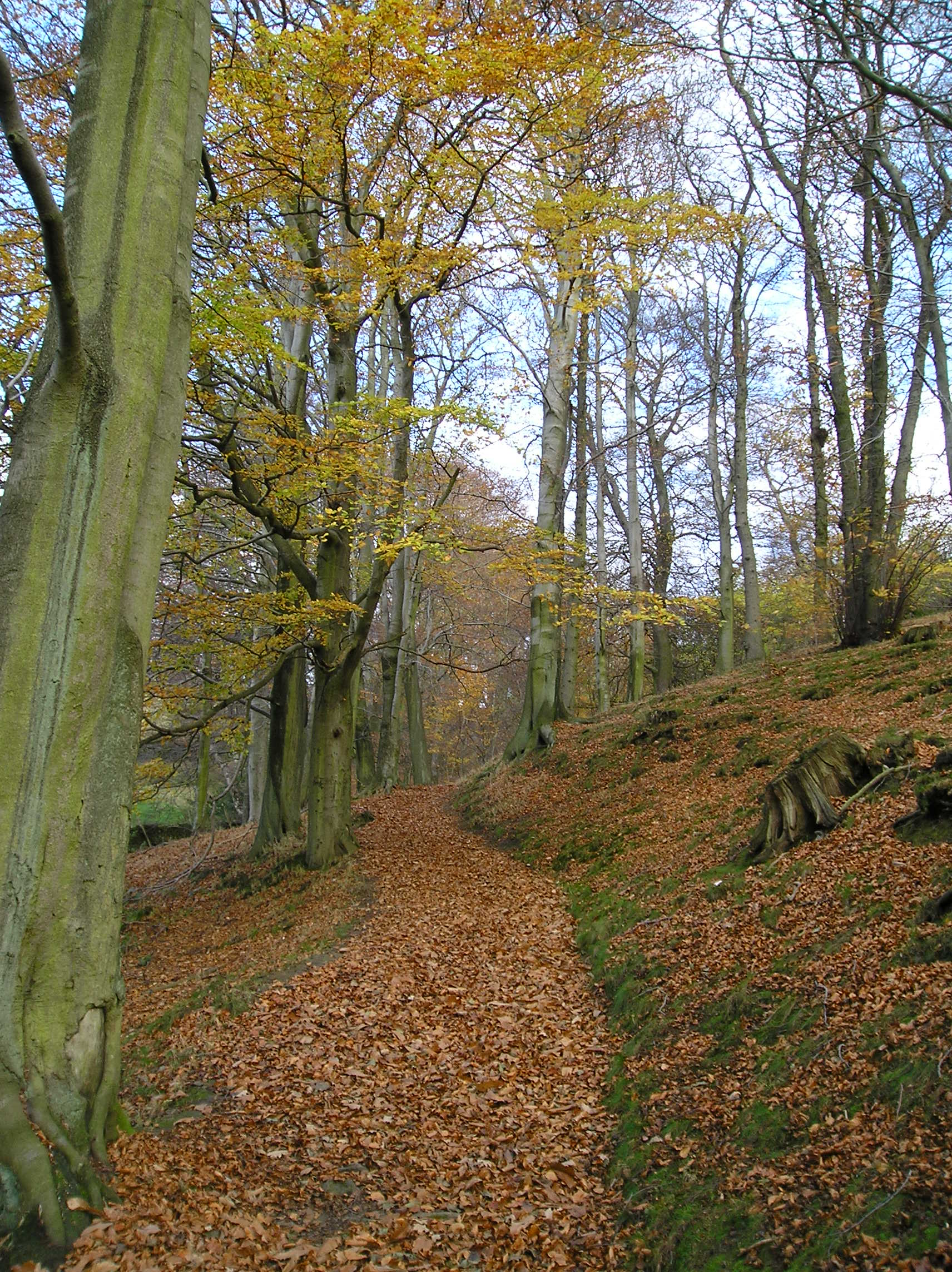 Stanage Plantation, Derbyshire