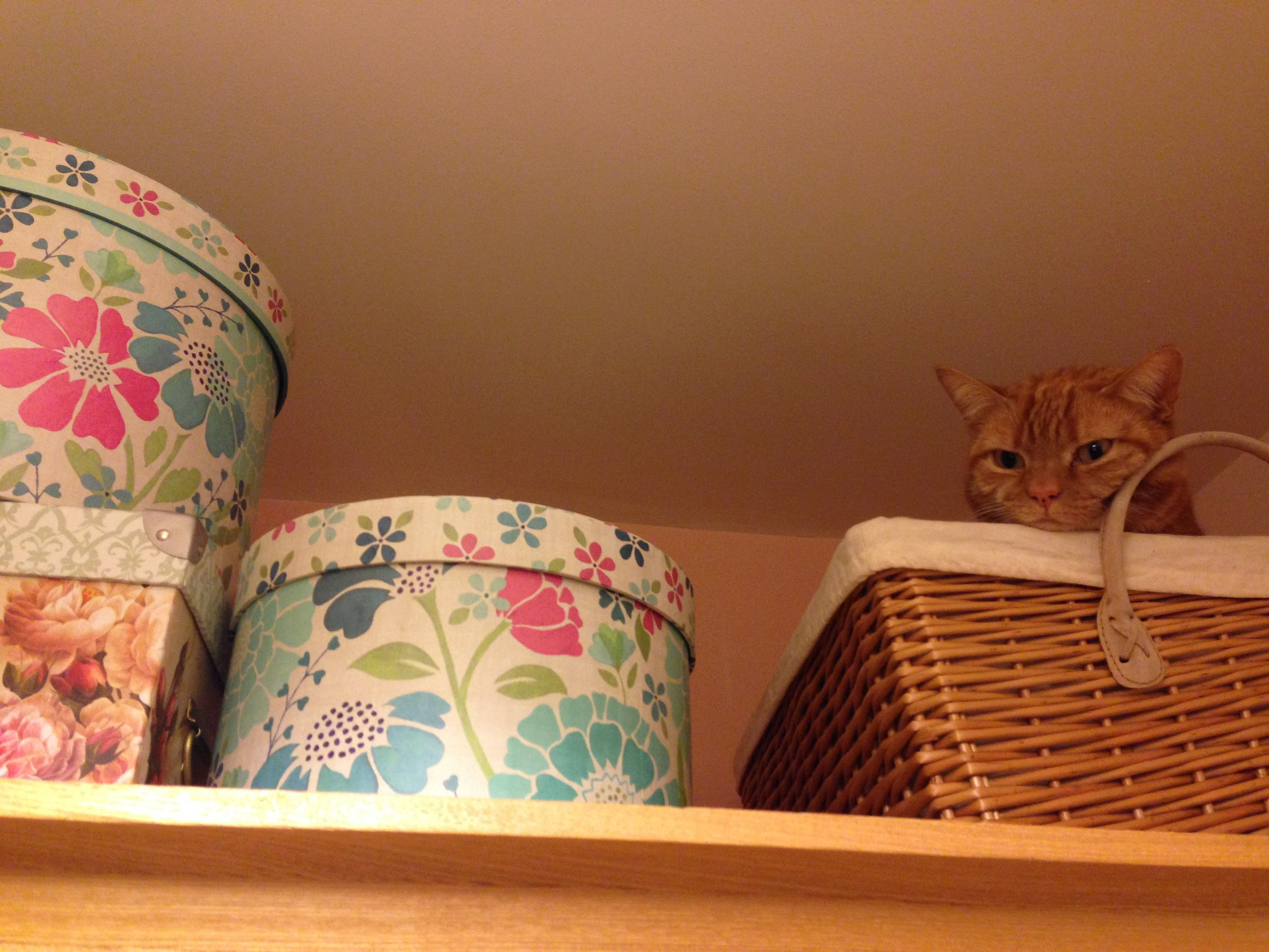 Luna in hiding