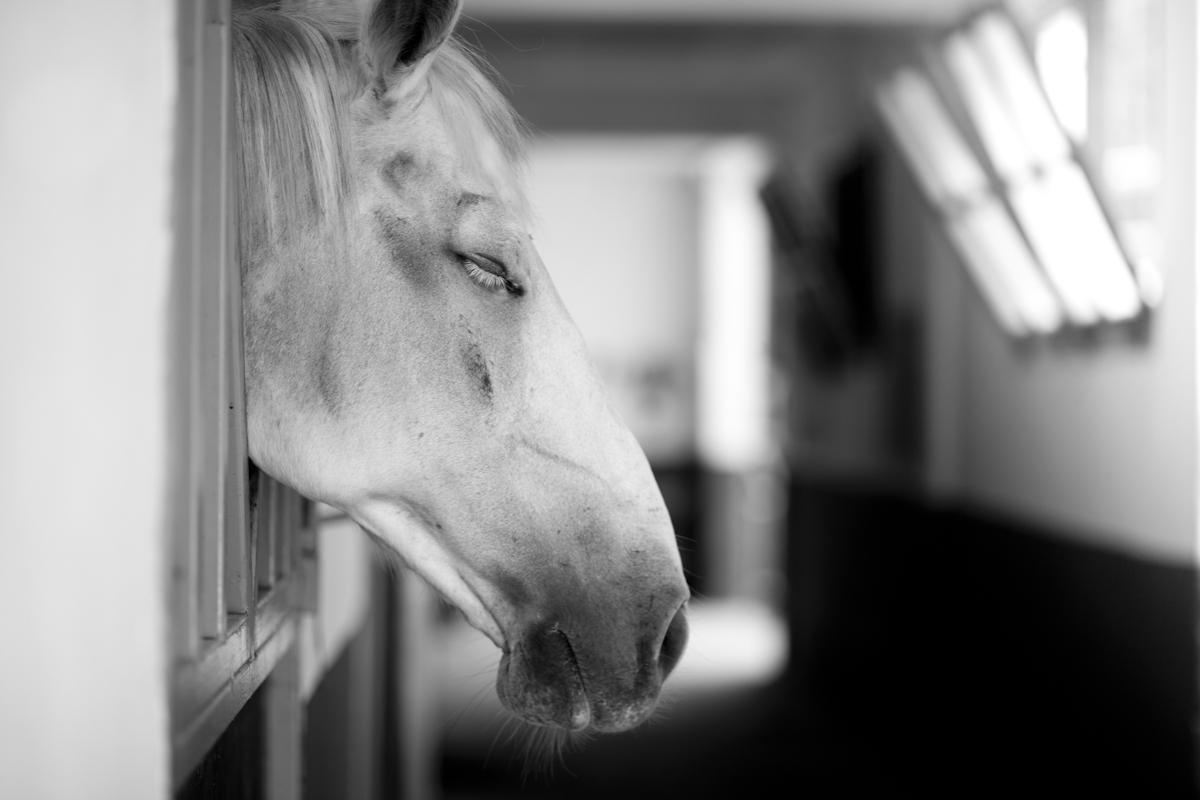 wild horse-35.jpg