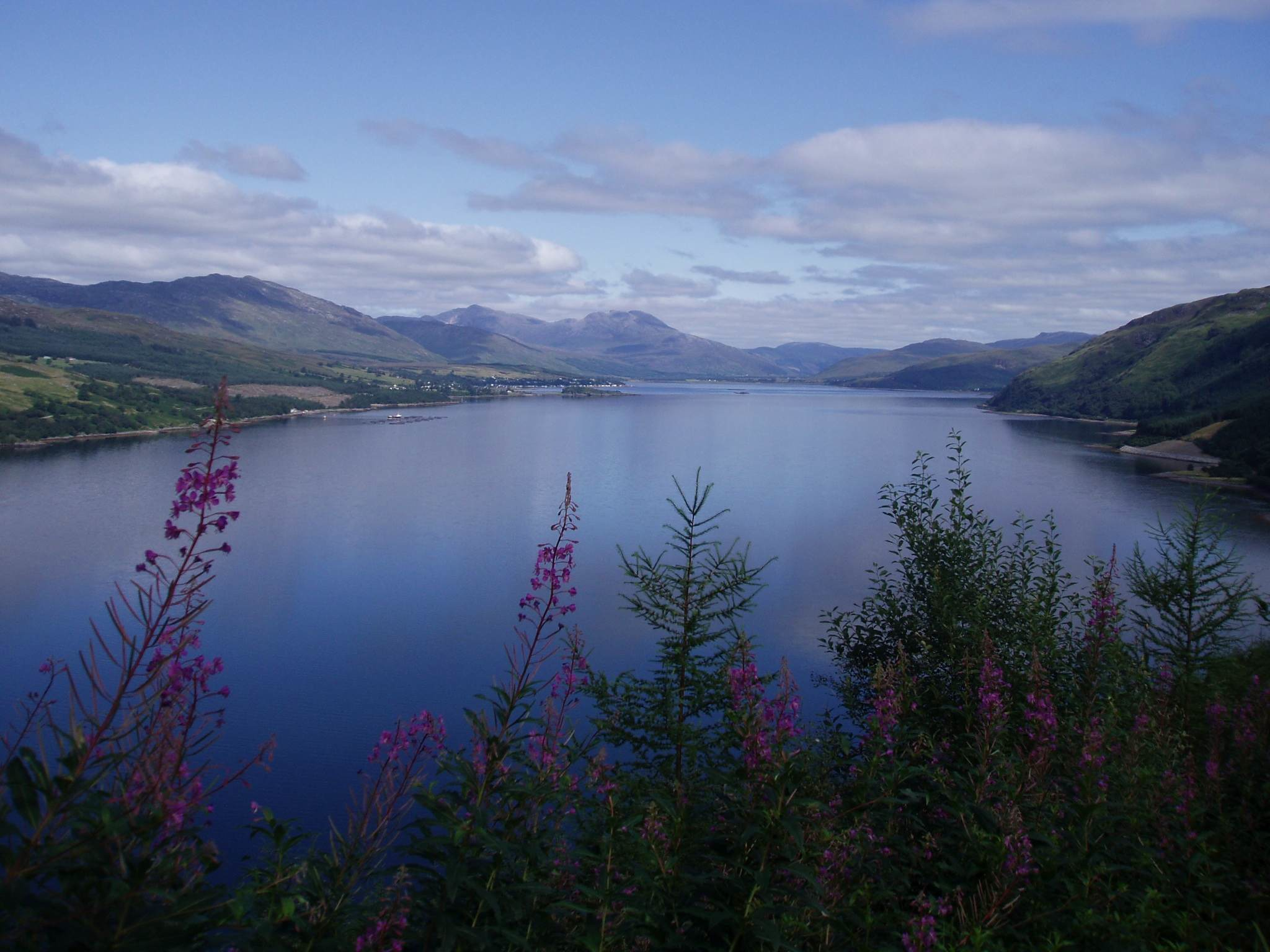 Lochcarron Blue big copy.jpg