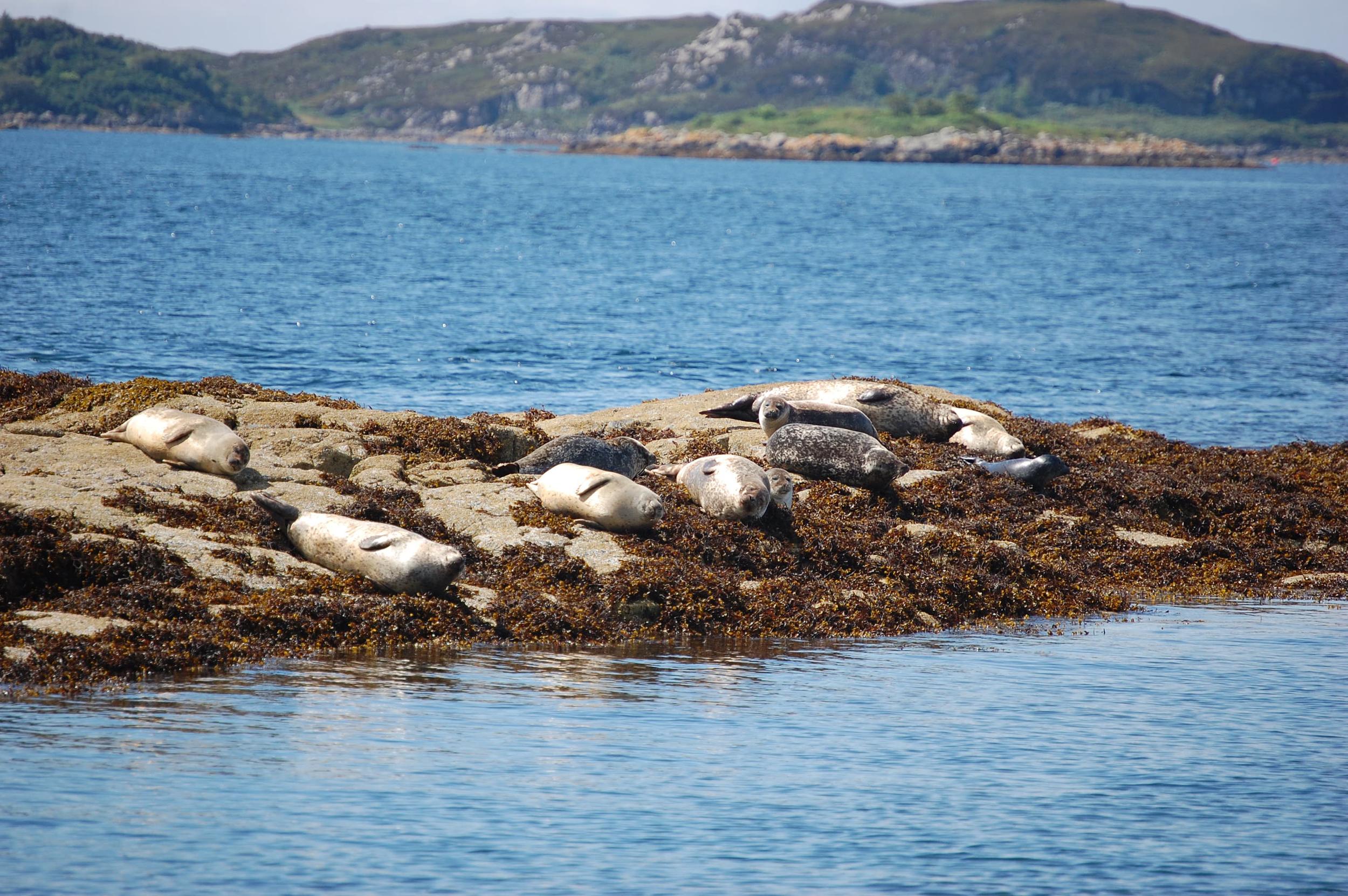 natural seals 6.jpg