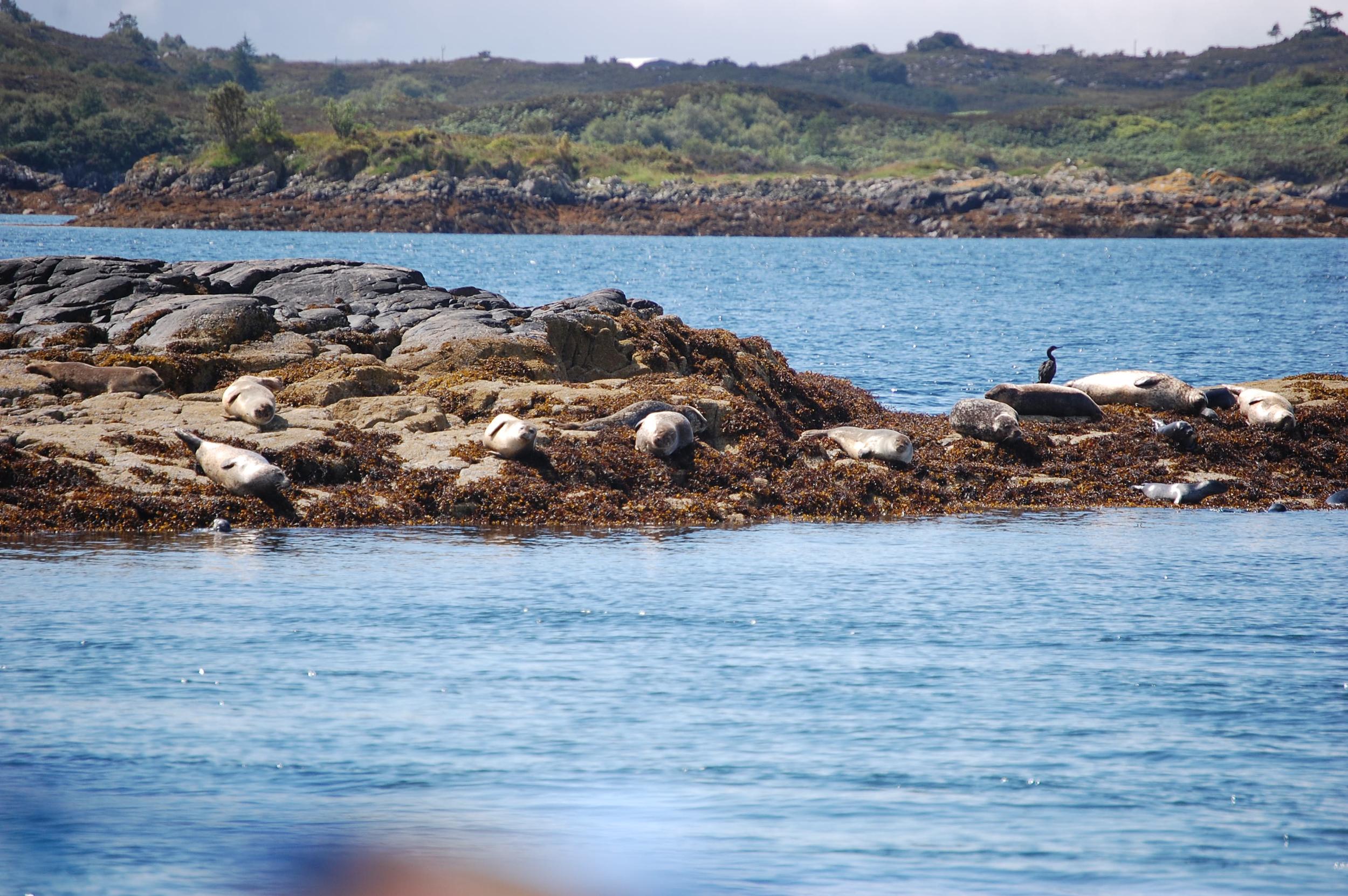 natural seals 3 .jpg