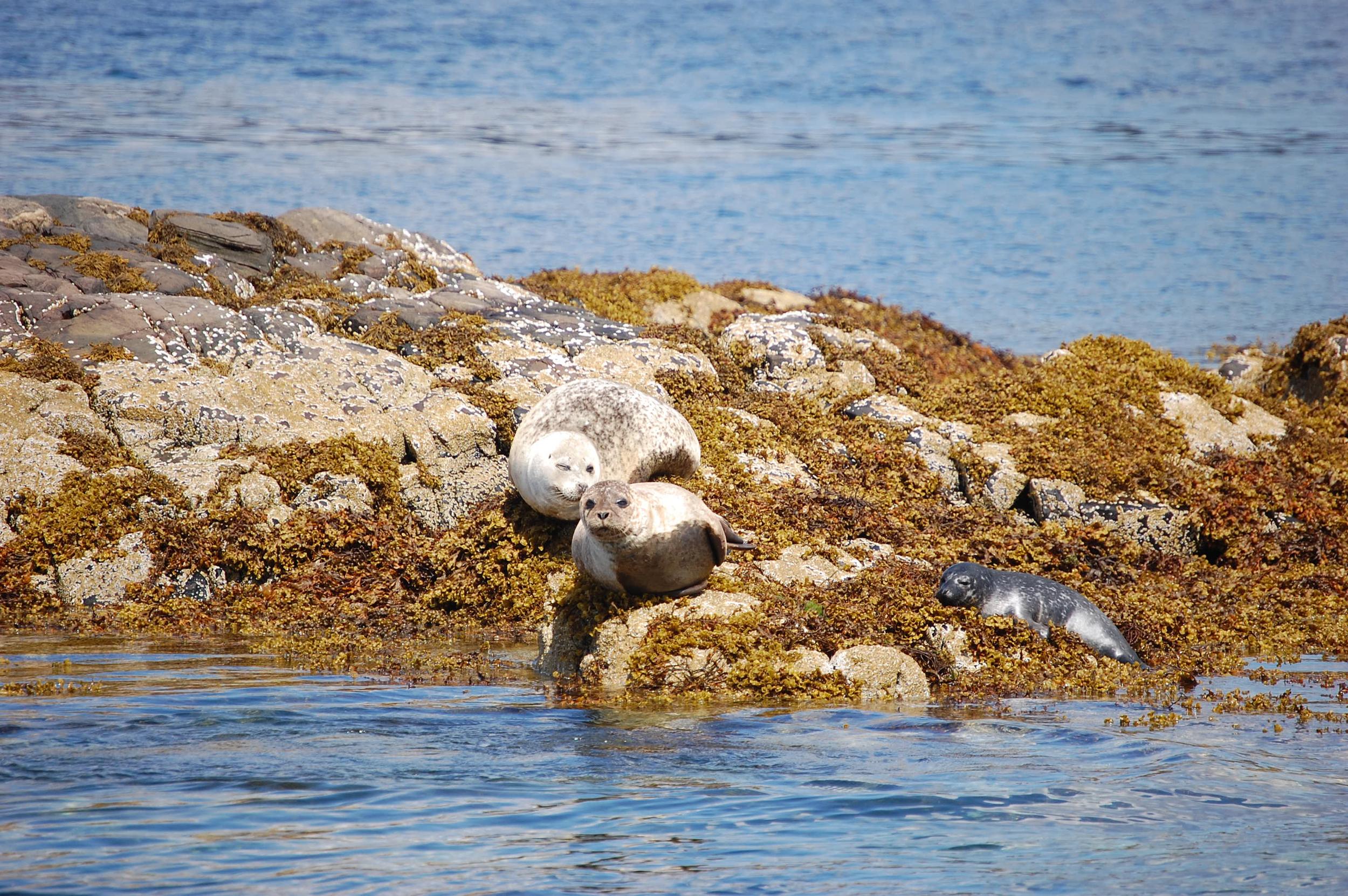 natural - seals.jpg