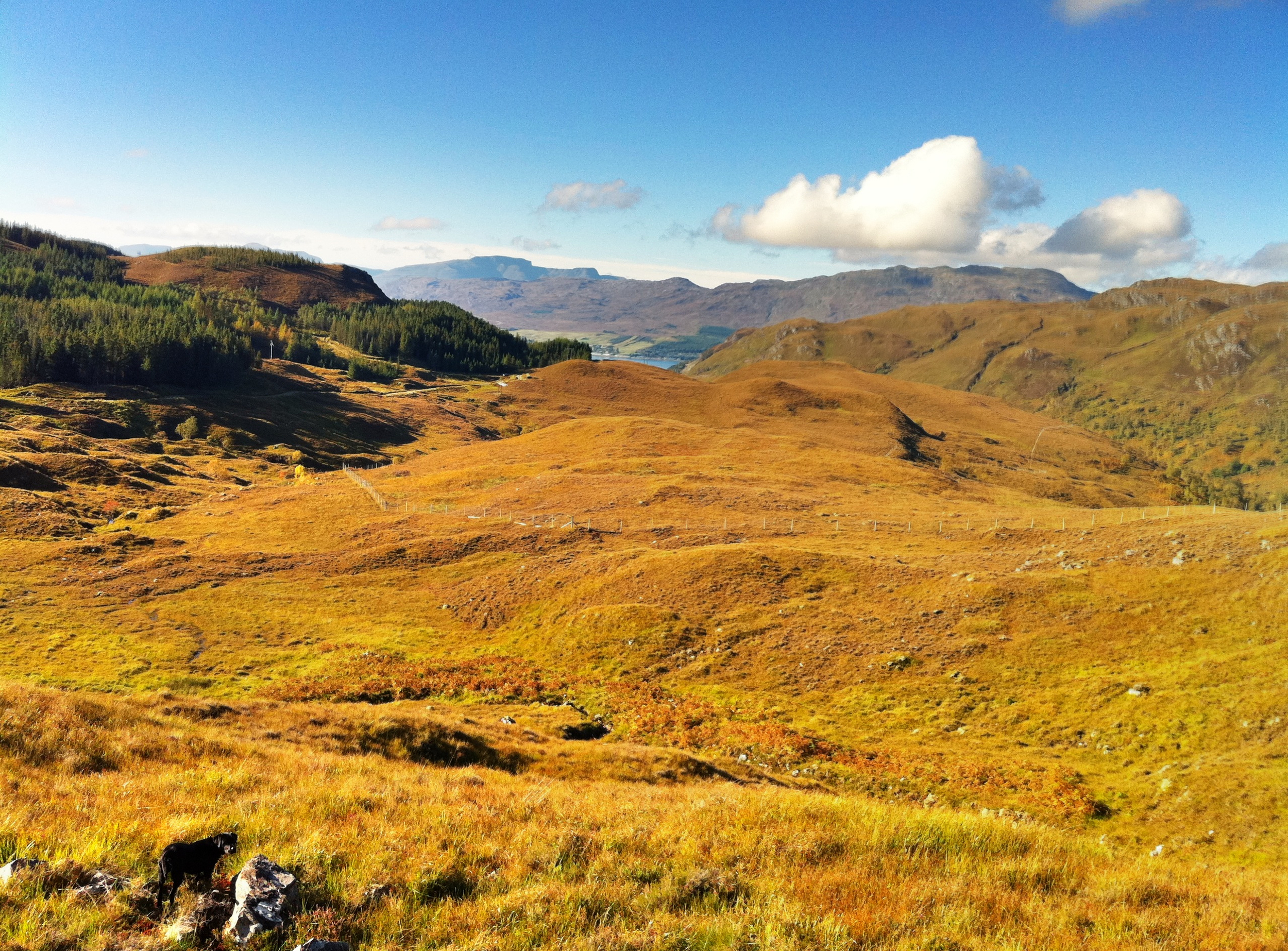 bike - view from track up to Ben Dronaig 2 back towards Loch Carron.jpg