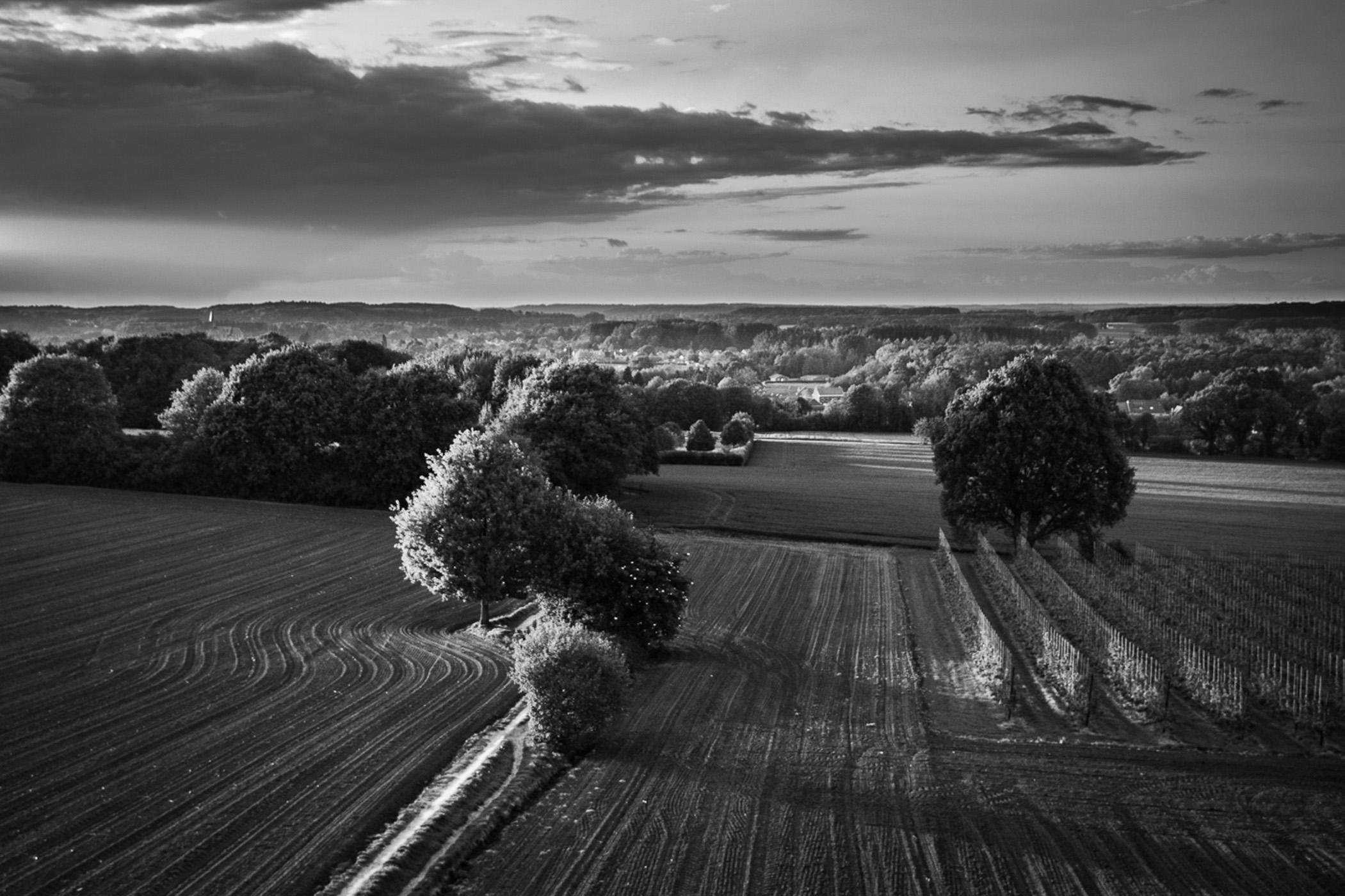 Dries Manshoven Bijnens -Landschap I
