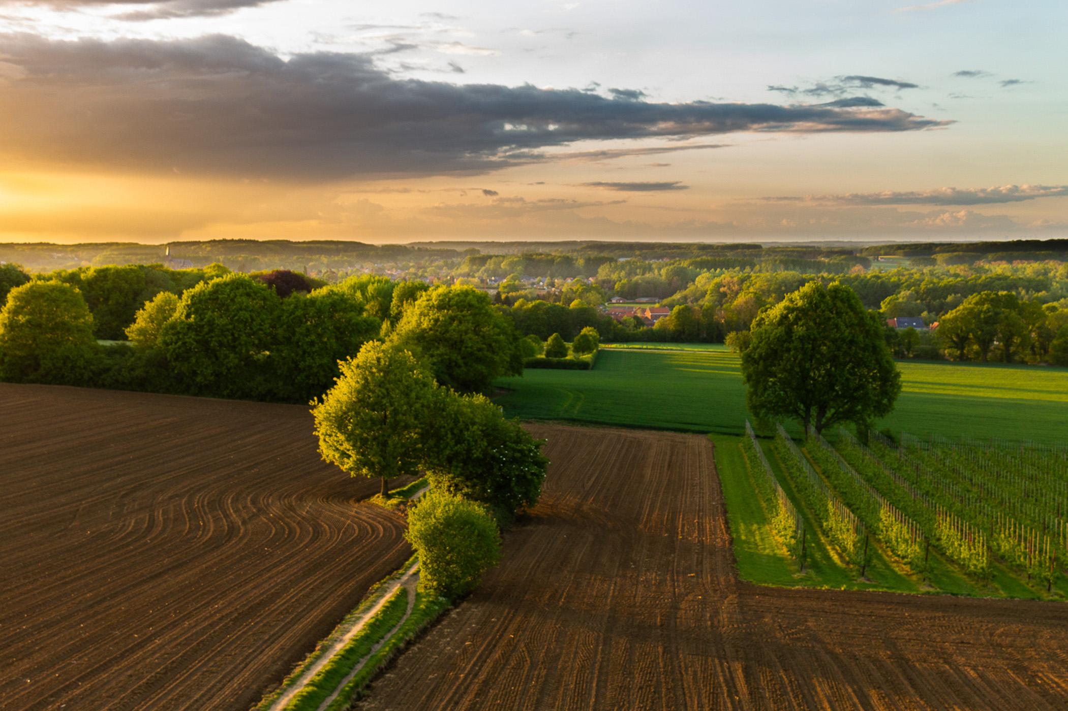 Dries Manshoven Bijnens -Landschap II