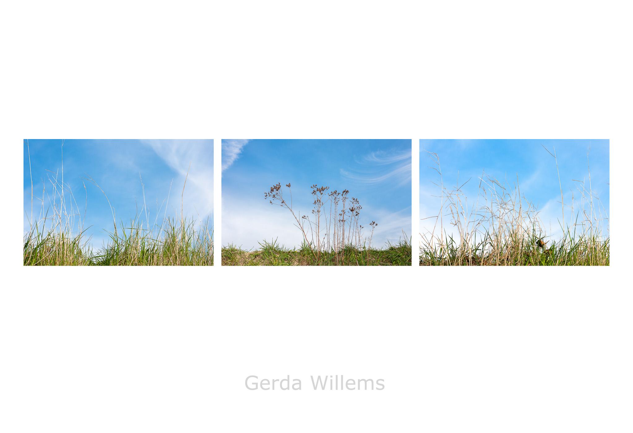 Gerda Willems - tegenlicht